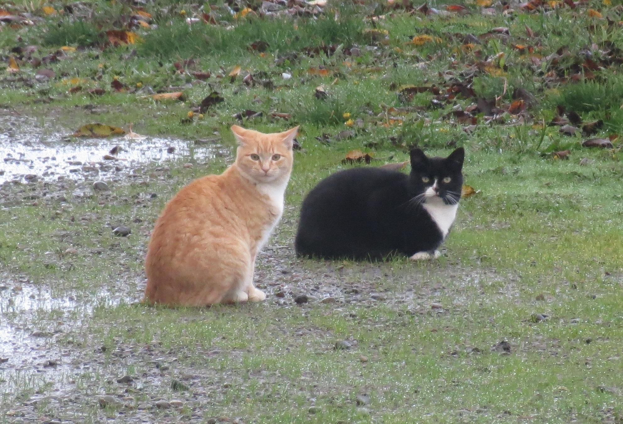 cats 003A.jpg