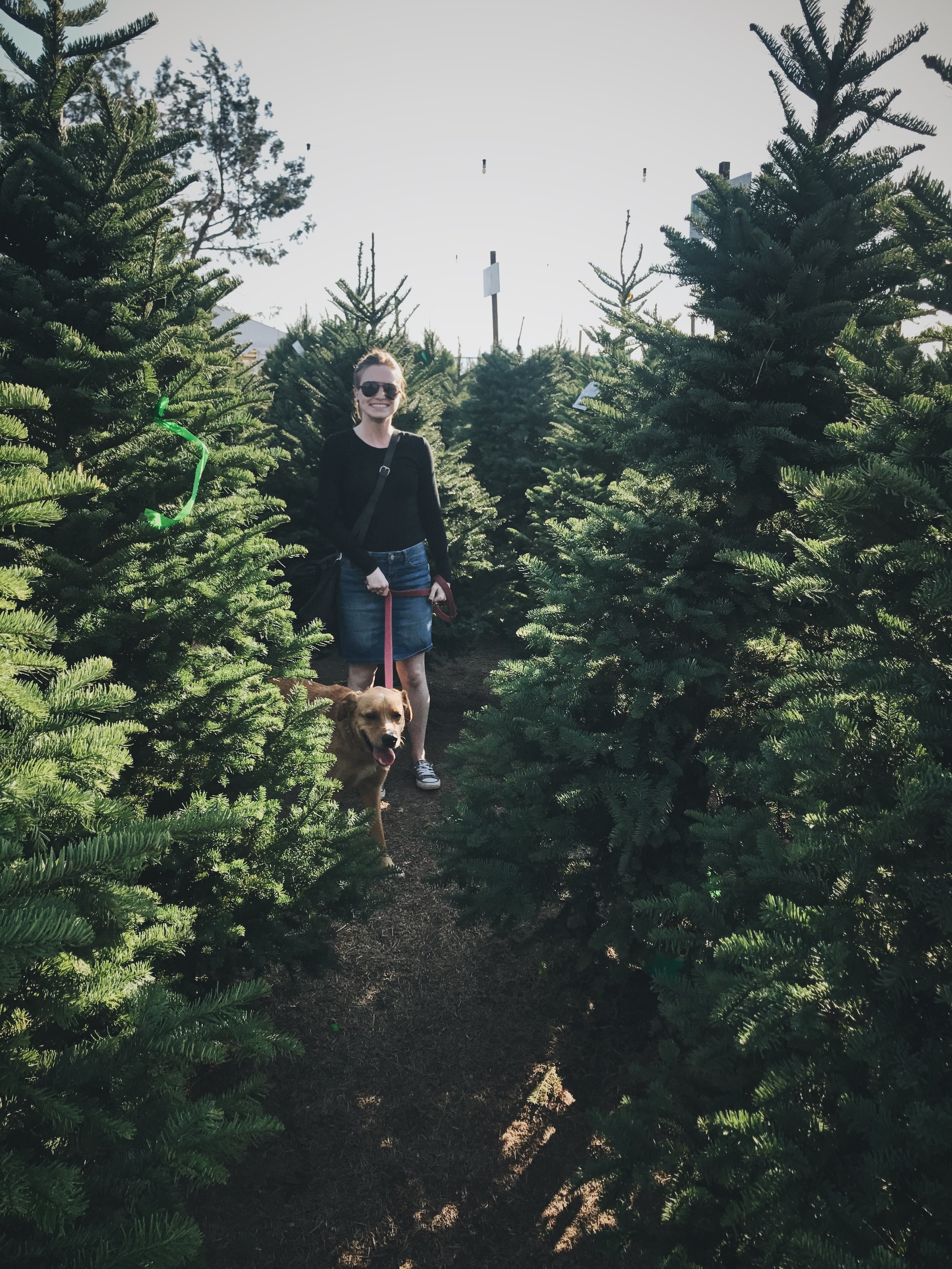 #336 Tree Hunting.JPG