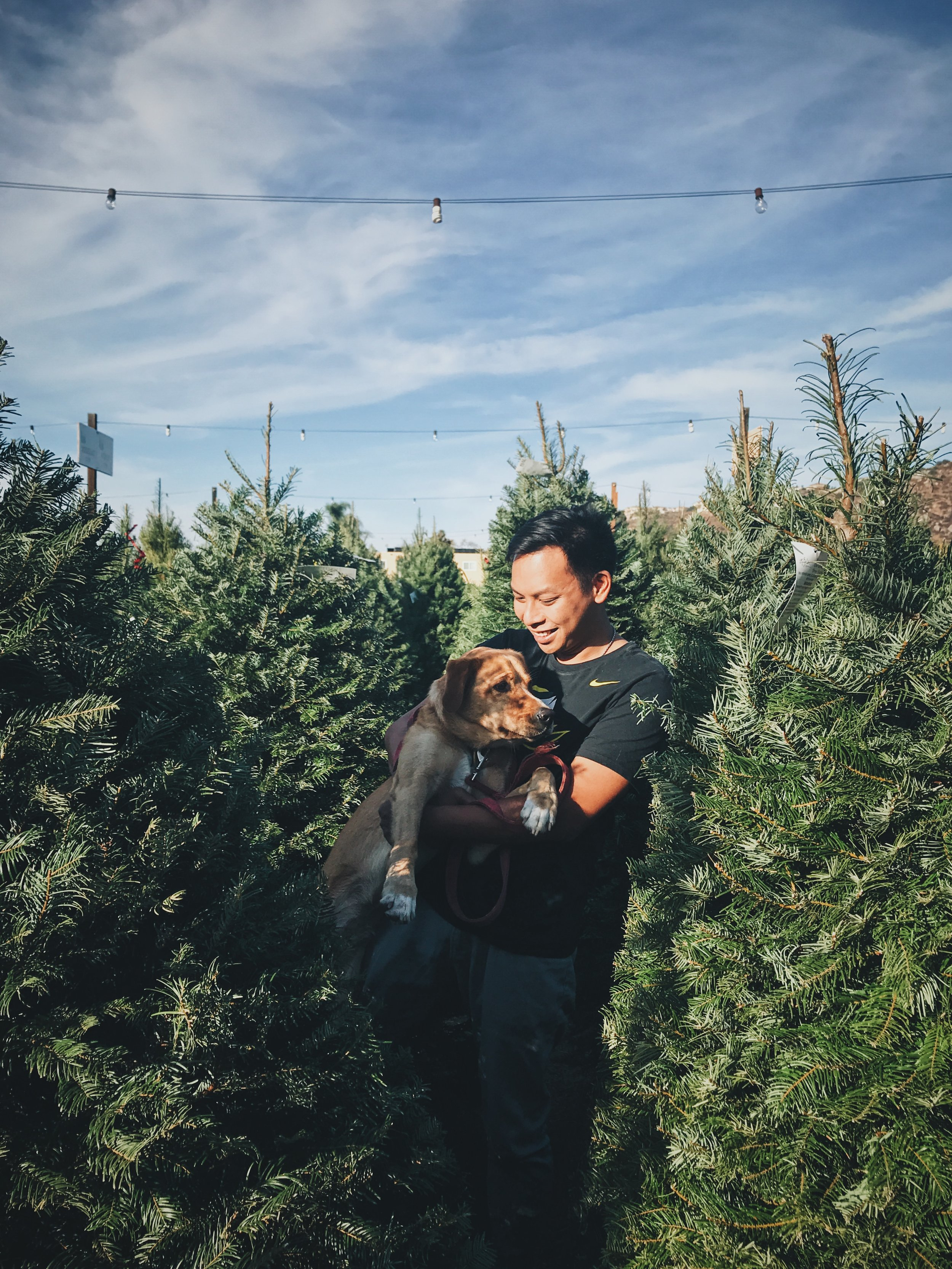 Tree Hunting [1].JPG