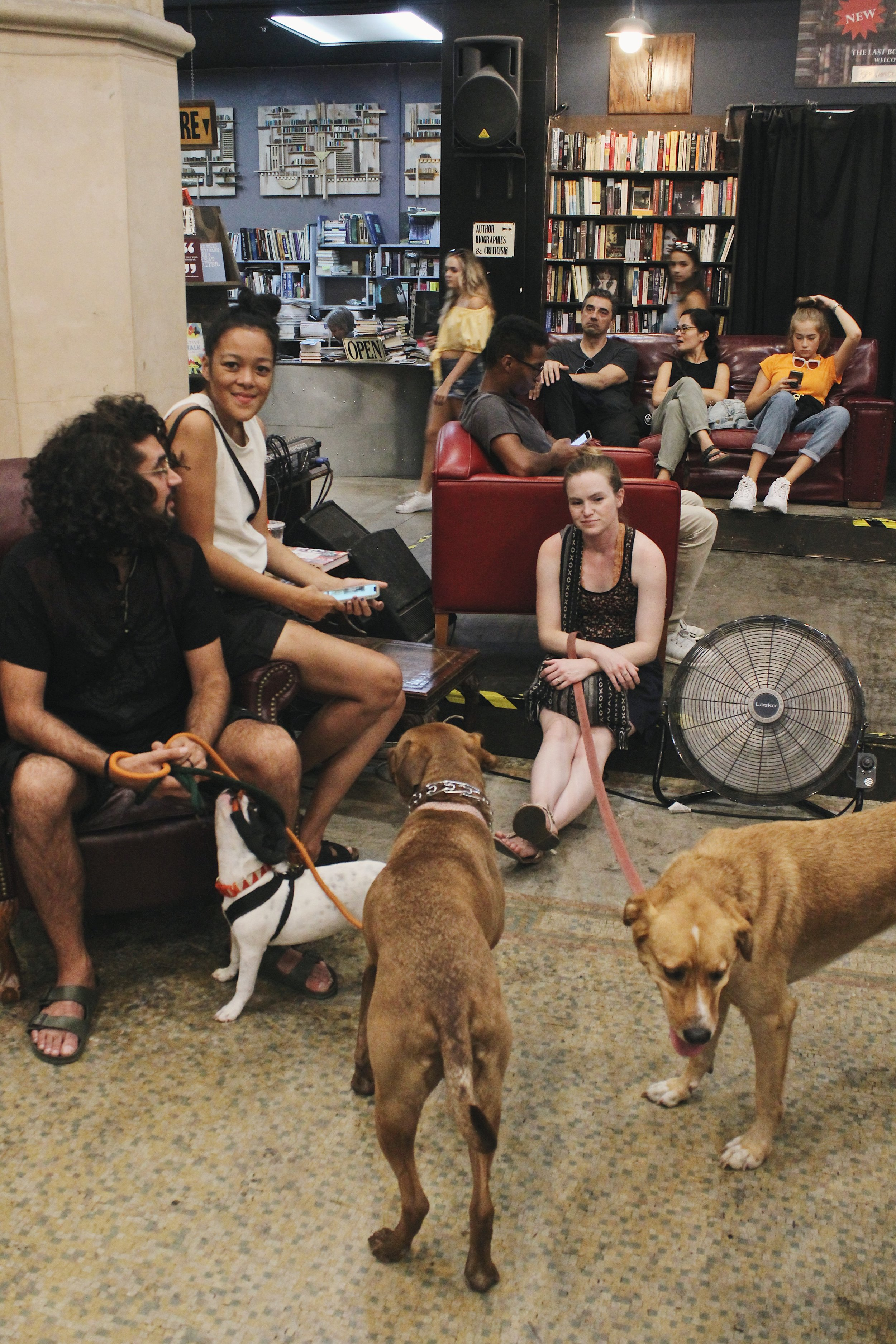 Dogs in a Bookshop.JPG