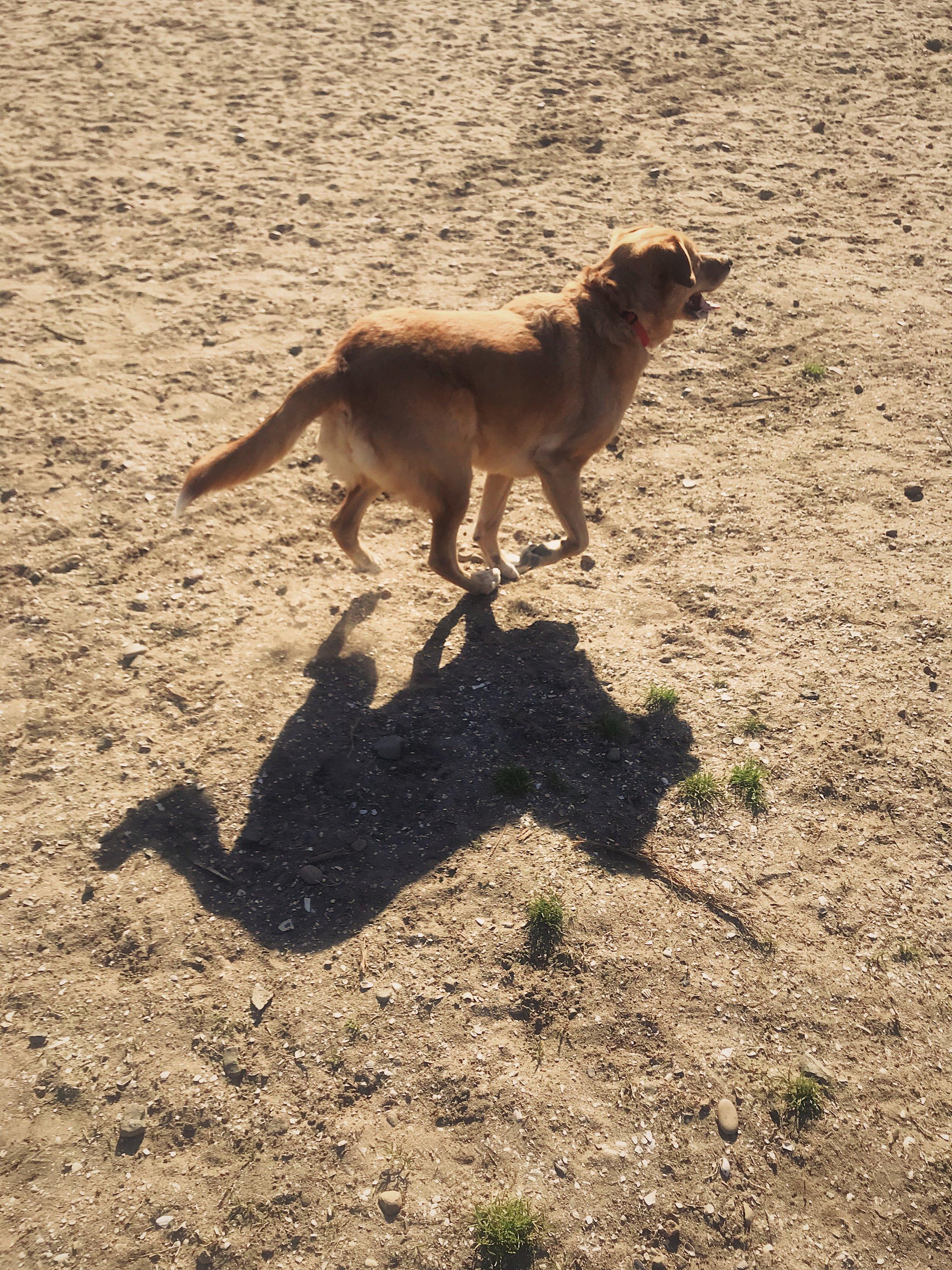 #55 Dog Runs.JPG