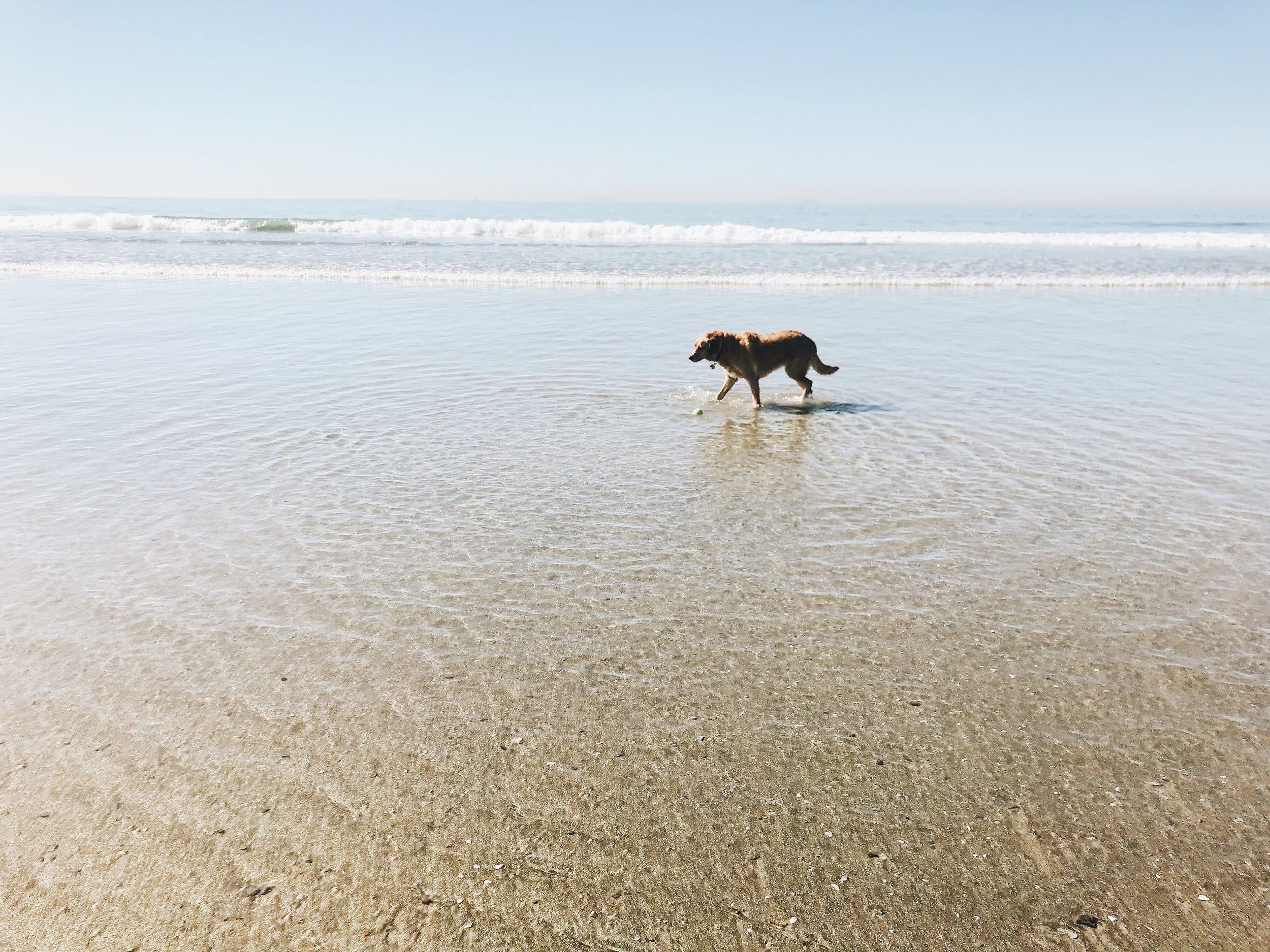 #75 Beach Day for Beignet.JPG