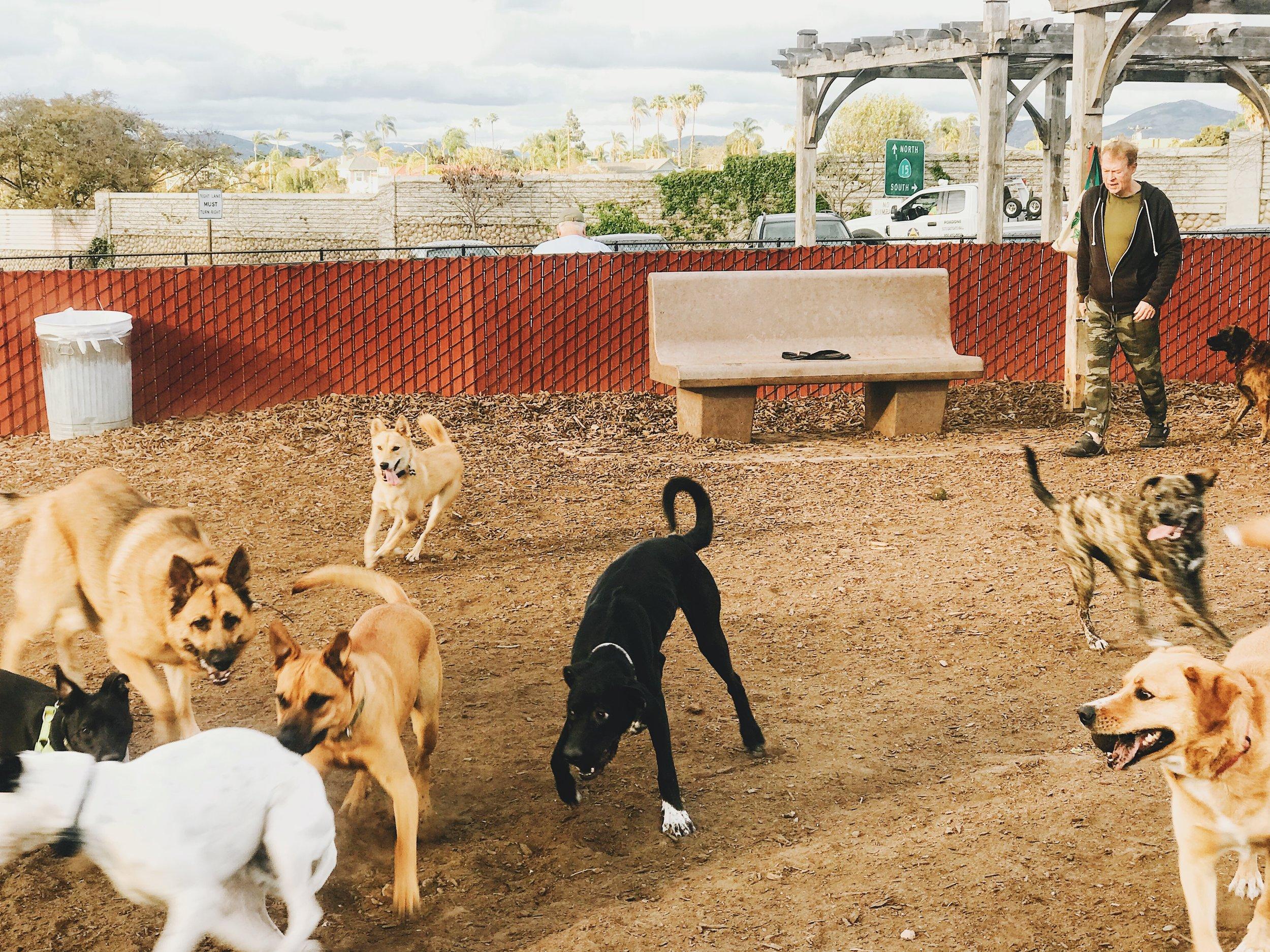 #95 Dog Park Hustle.JPG