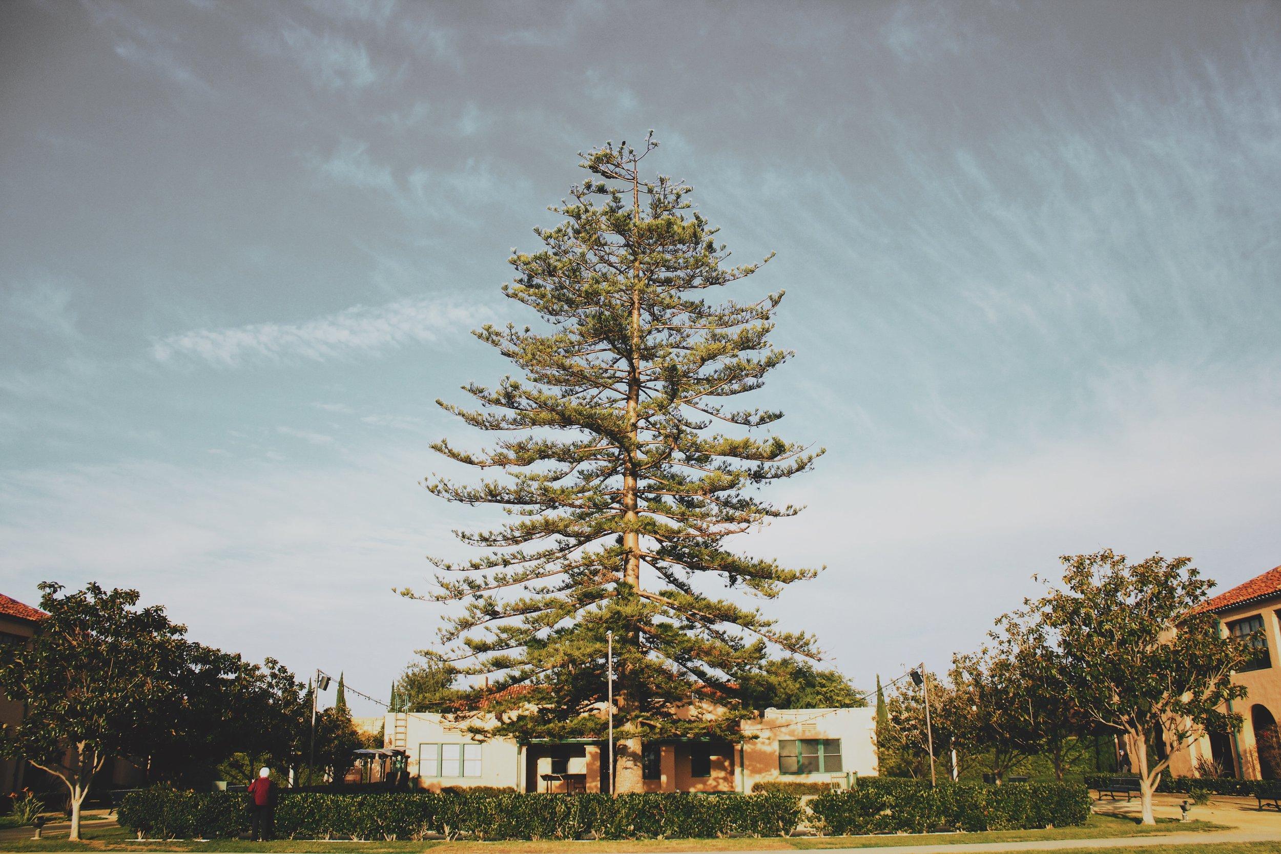 Liberty Tree [4].JPG