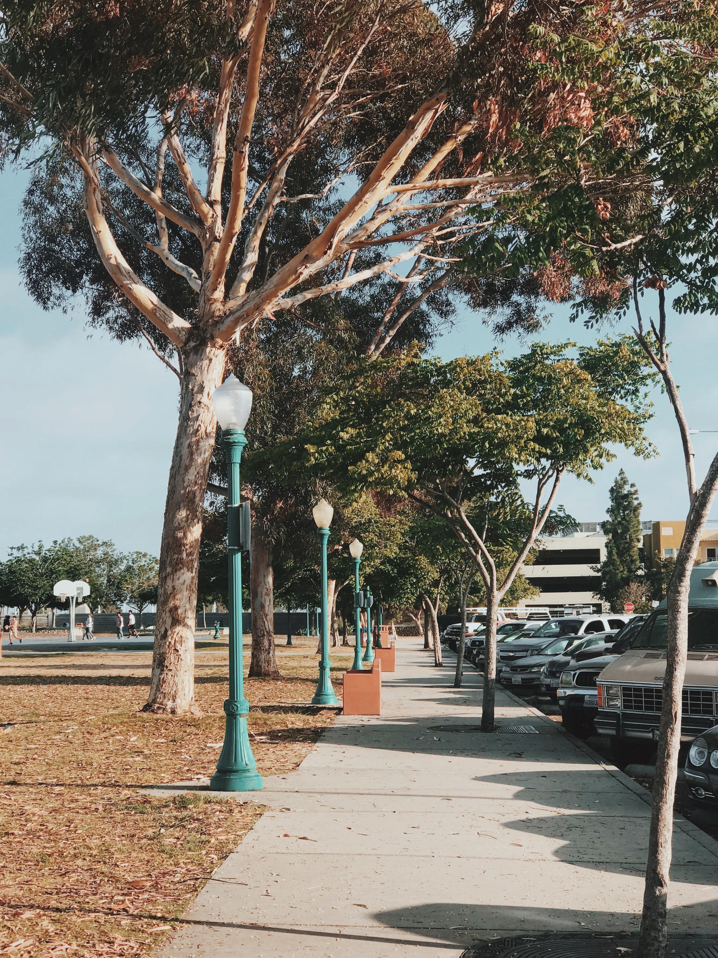 #184 Teralta Park.JPG