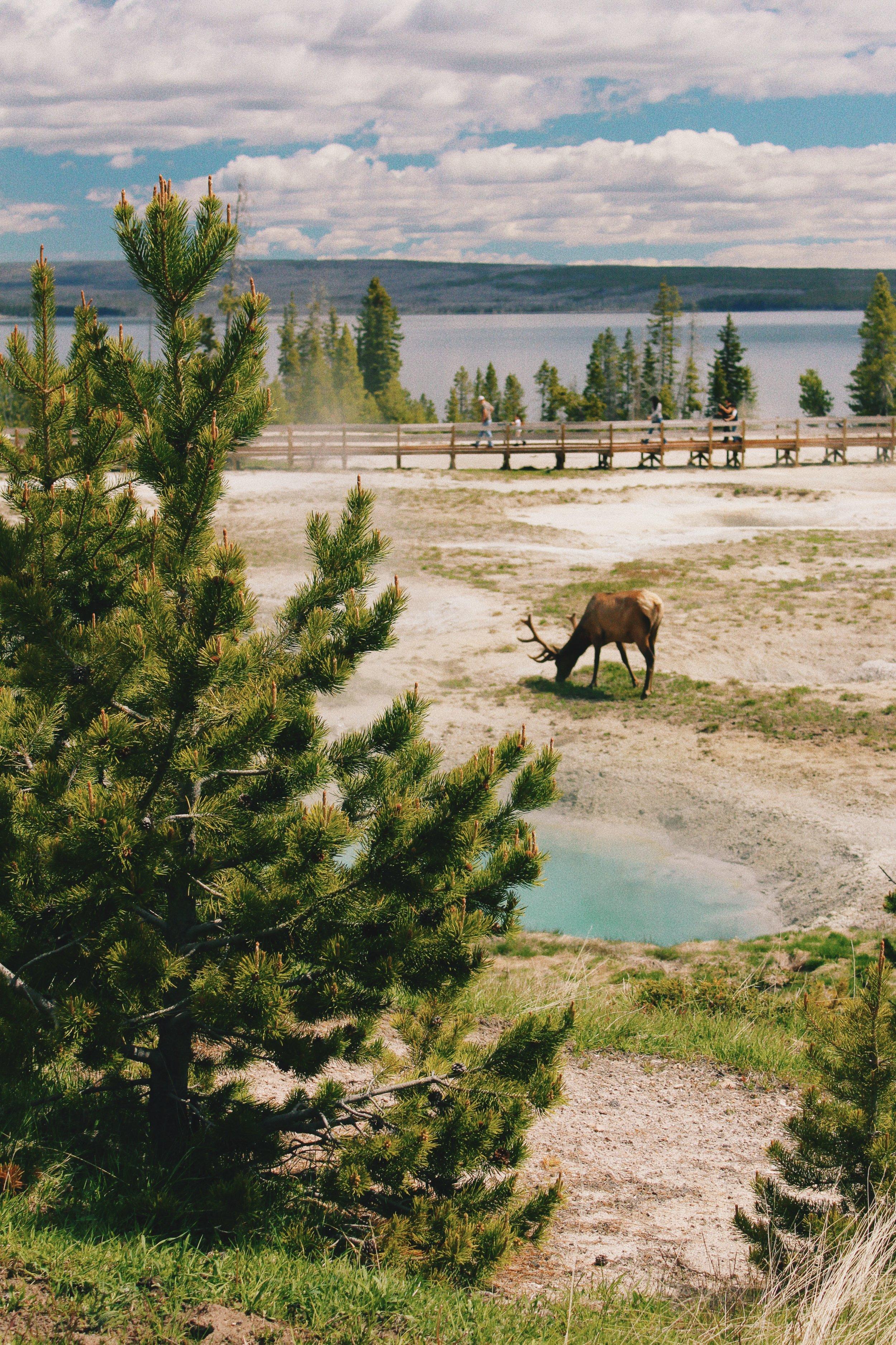 167 Elk.JPG
