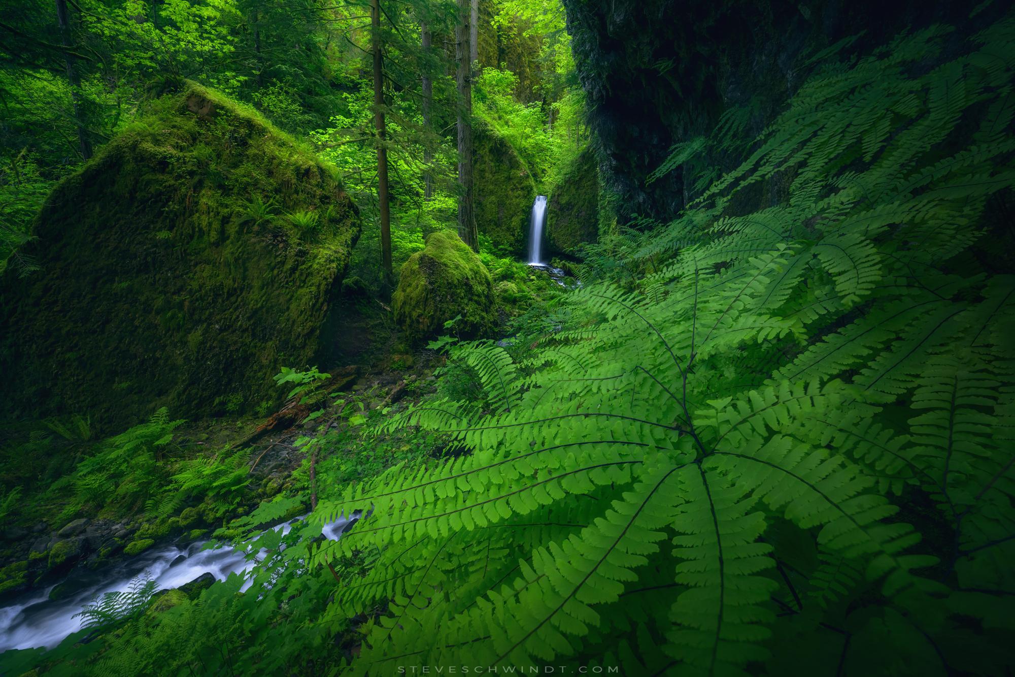 "Ruckel Creek ""Mossy Grotto Falls"", Oregon (Spring, 2017)"