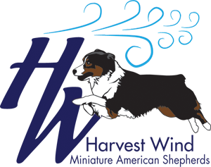 I also built this dog breeder's website in Wordpress!