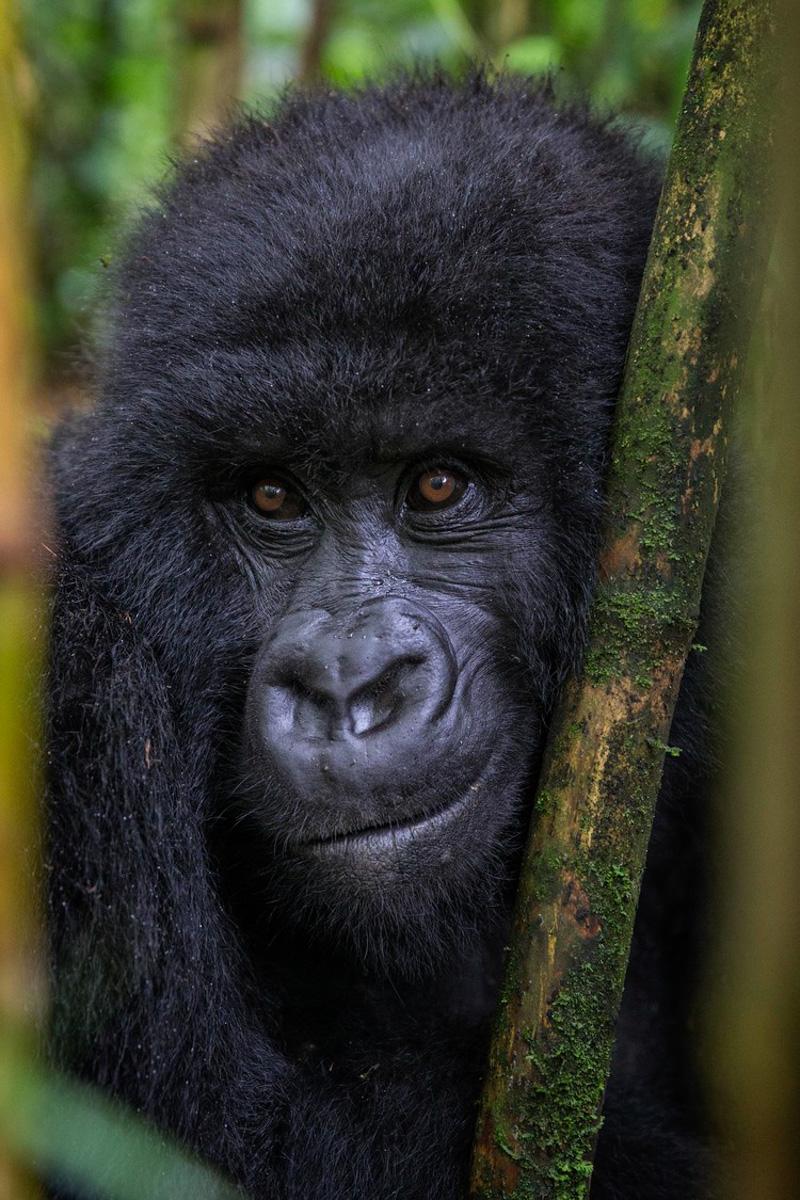 Gorilla_Trek_1.jpg