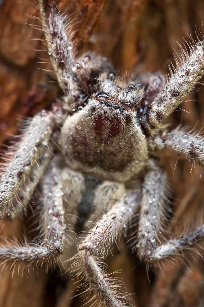 Bush+Spider+4.jpg