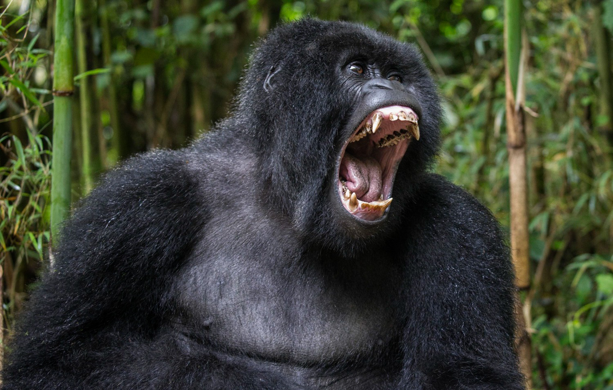 Gorilla_Trek_13.jpg