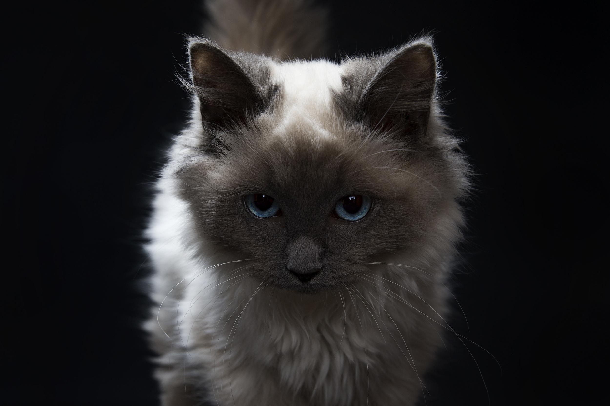 Pets_43.jpg