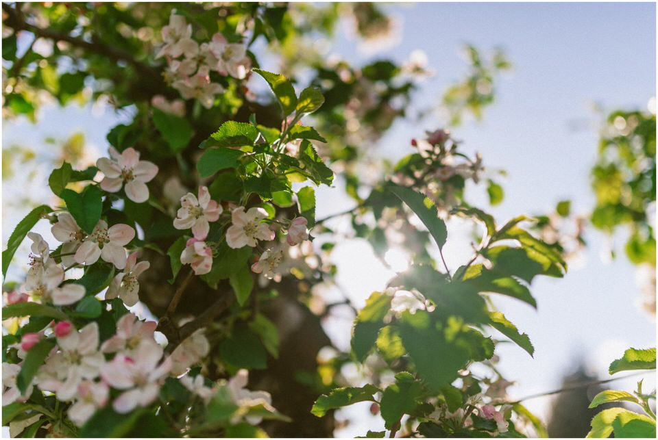 poroka-wedding-inspiration-spring-styled-session-sanjska-obleka-nika-grega-orchard-themed-destionation-photographer-slovenia-poročni-fotograf-slovenija-europe-boho-romantic-vintage 002.jpg