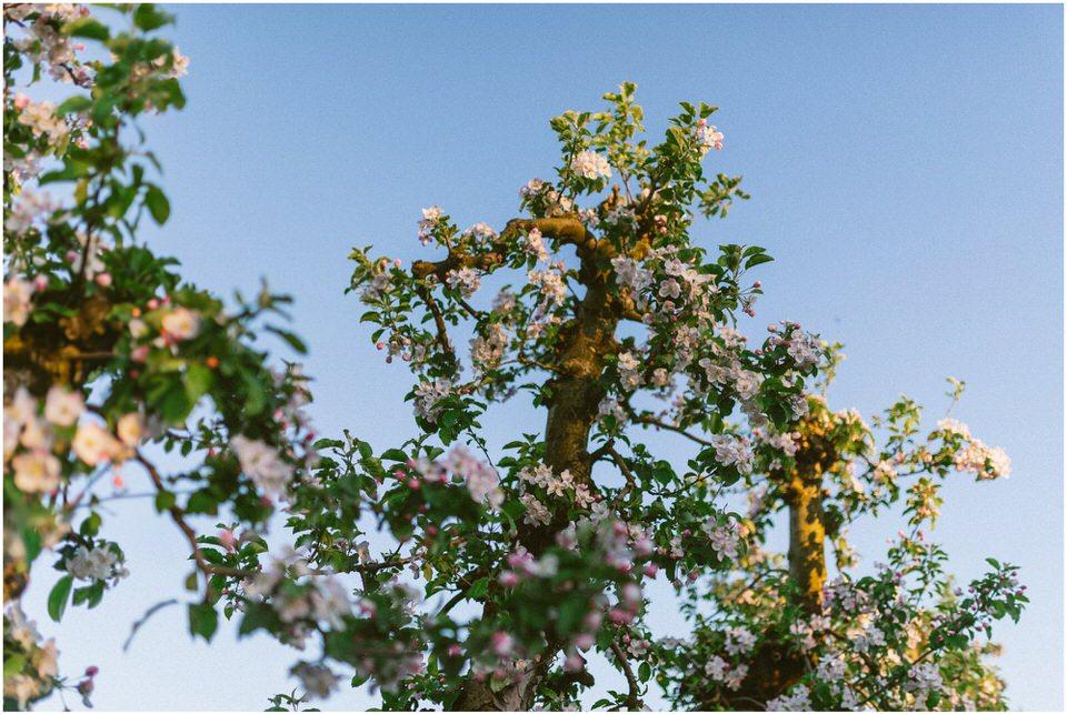 poroka-wedding-inspiration-spring-styled-session-sanjska-obleka-nika-grega-orchard-themed-destionation-photographer-slovenia-poročni-fotograf-slovenija-europe-boho-romantic-vintage 042.jpg