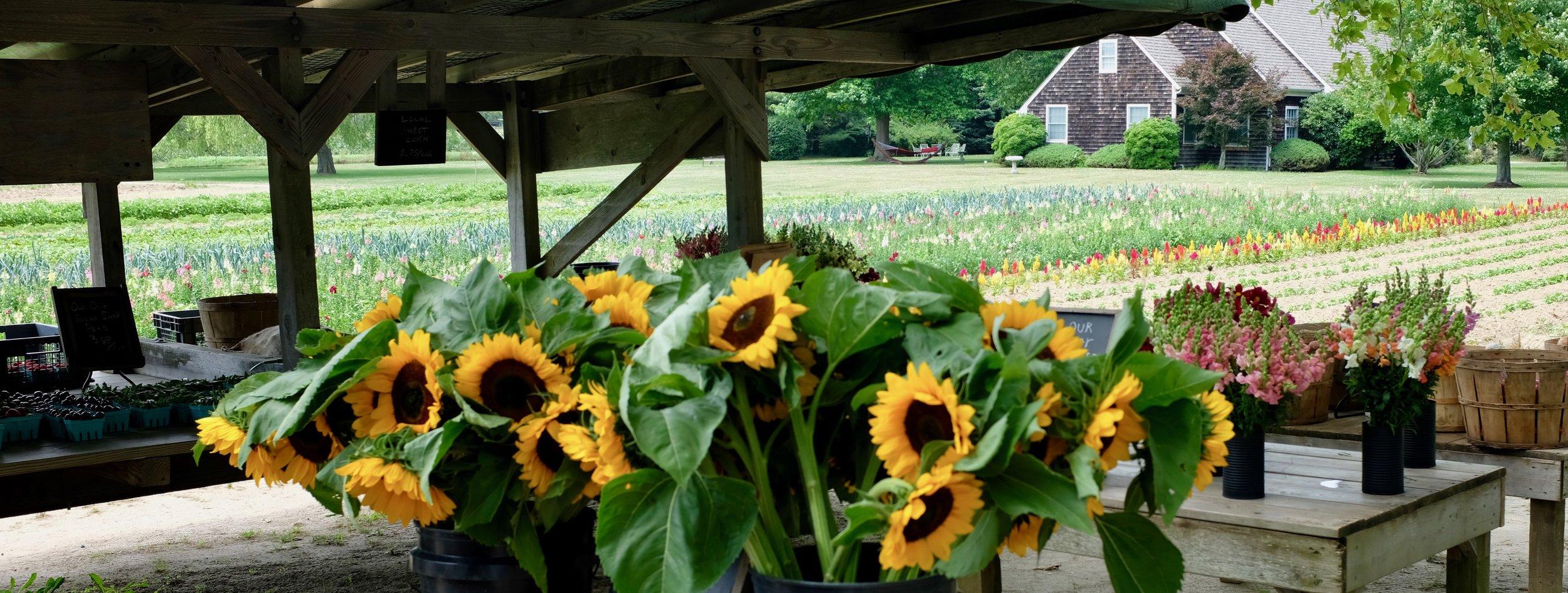 Montauk Long Island USA Reiseblog BeFifty