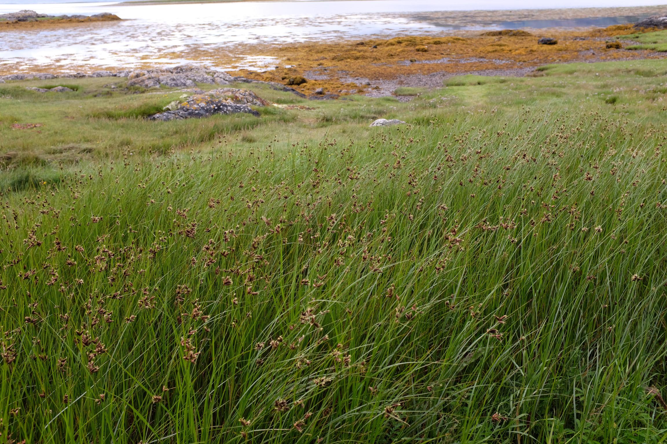 Isle of Skye Schottland Reiseblog