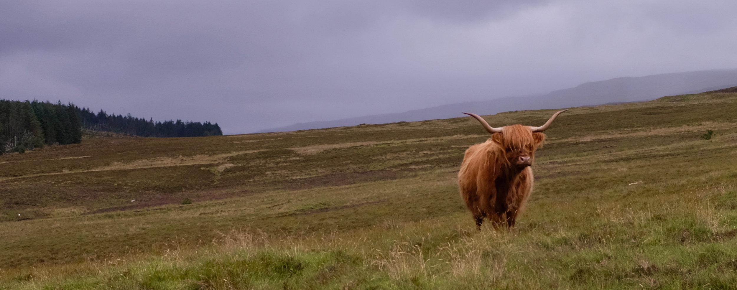 Isle of Skye Schottland Reiseblog Galloway