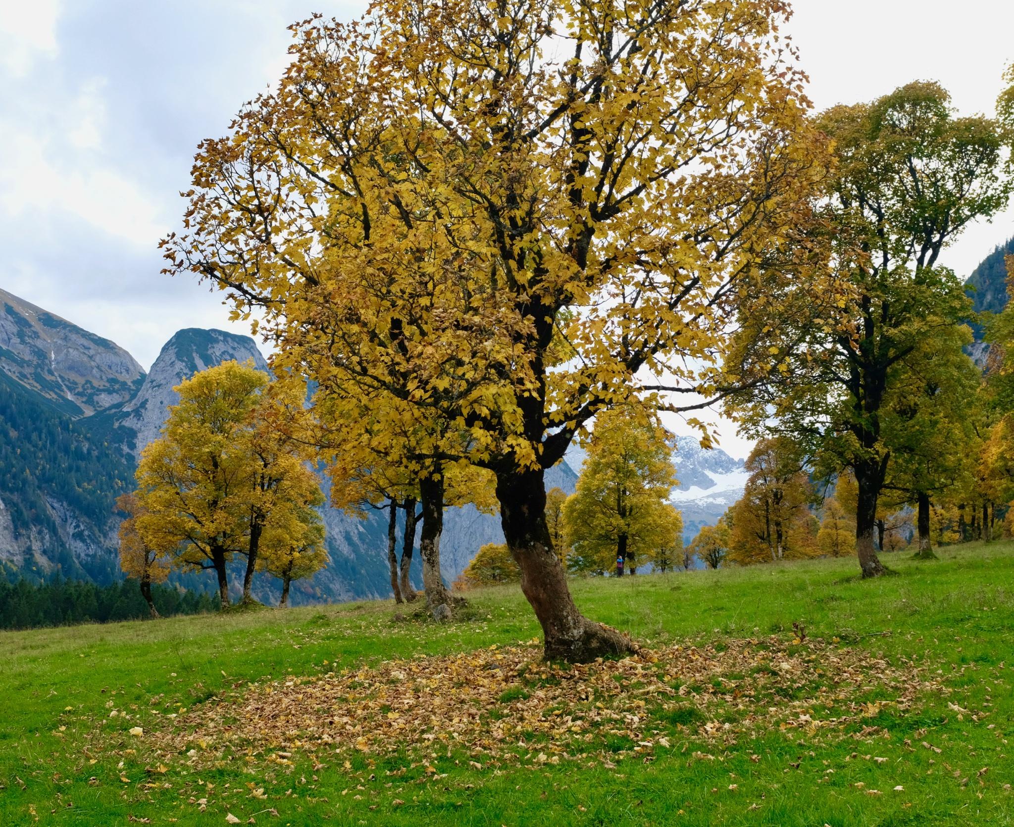 Ausflüge von München. Die schönsten Plätze in Bayern und Tirol. Brauneck und Tirol. BeFifty Blog für Frauen über 40 und ab 50. Beate Finken. Wandertipps in Bayern und Tirol. Eng und Ahornboden Tirol.