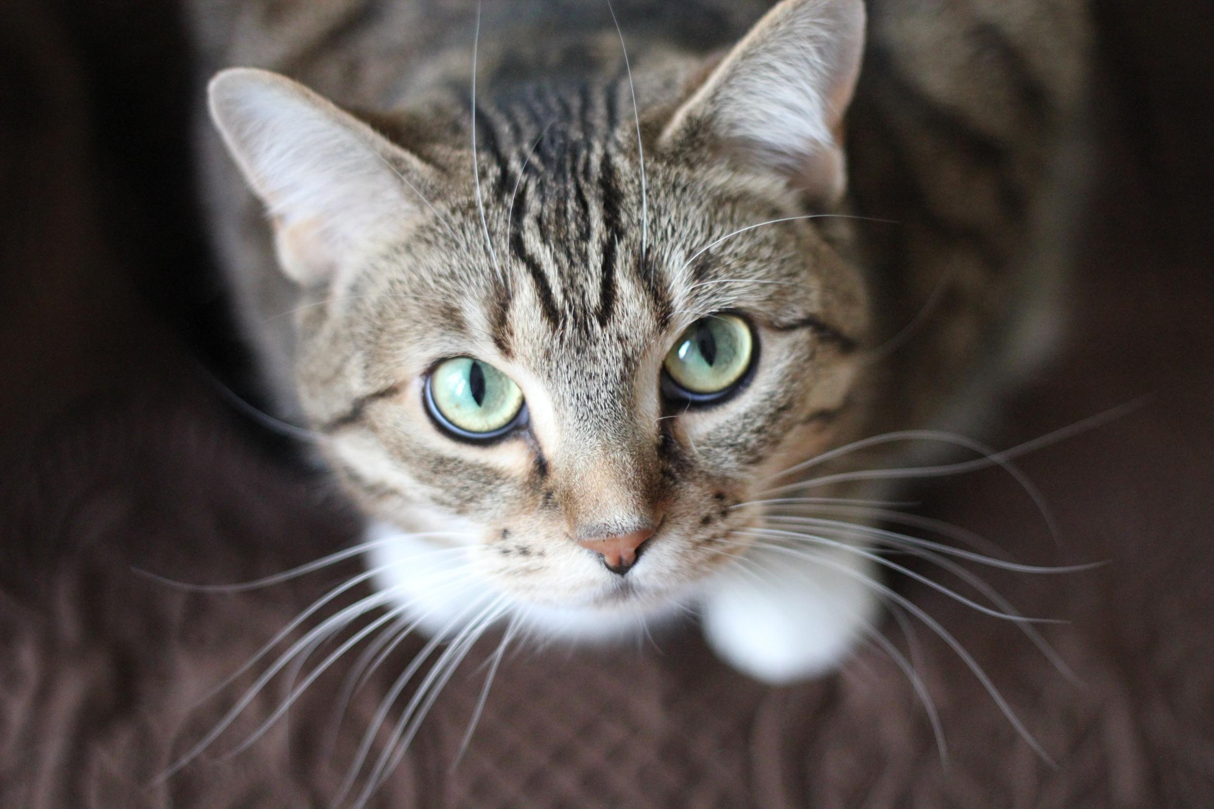 Kitties need their whiskers!