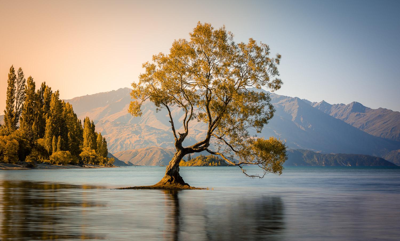 L'arbre de Wanaka - Nouvelle Zélande