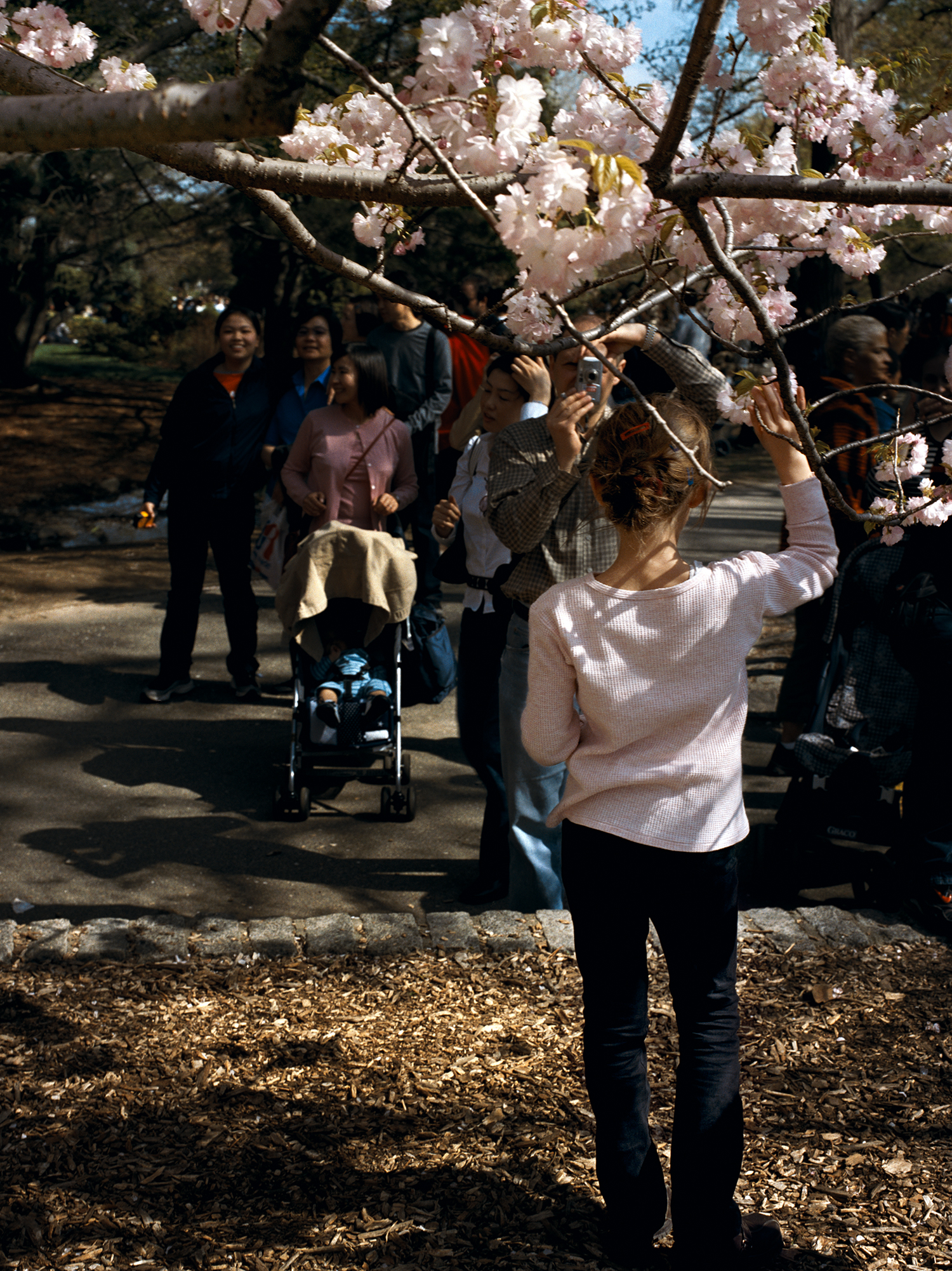 Brooklyn Botanic Garden, New York, 2003