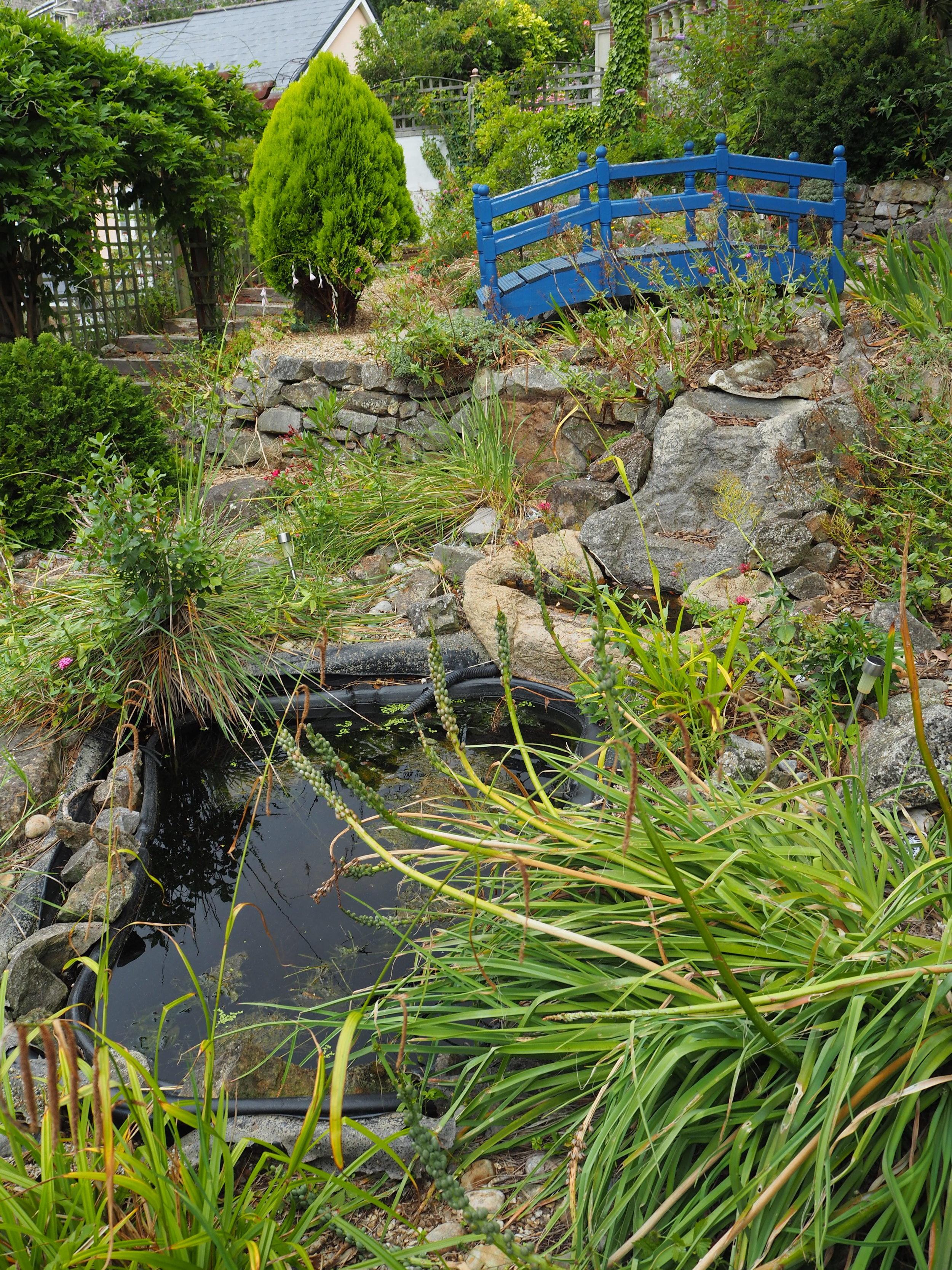 Unattractive & Lifeless Preformed Pond