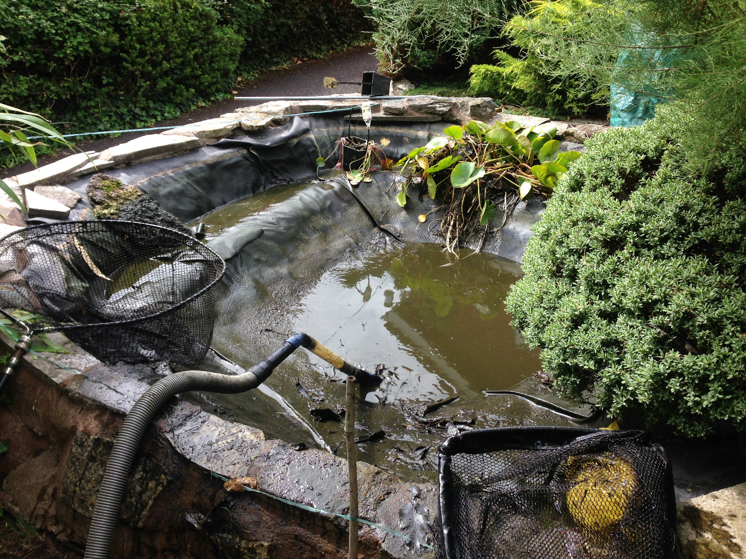 This pond was in desperate need of a Full Drain Down & Clean
