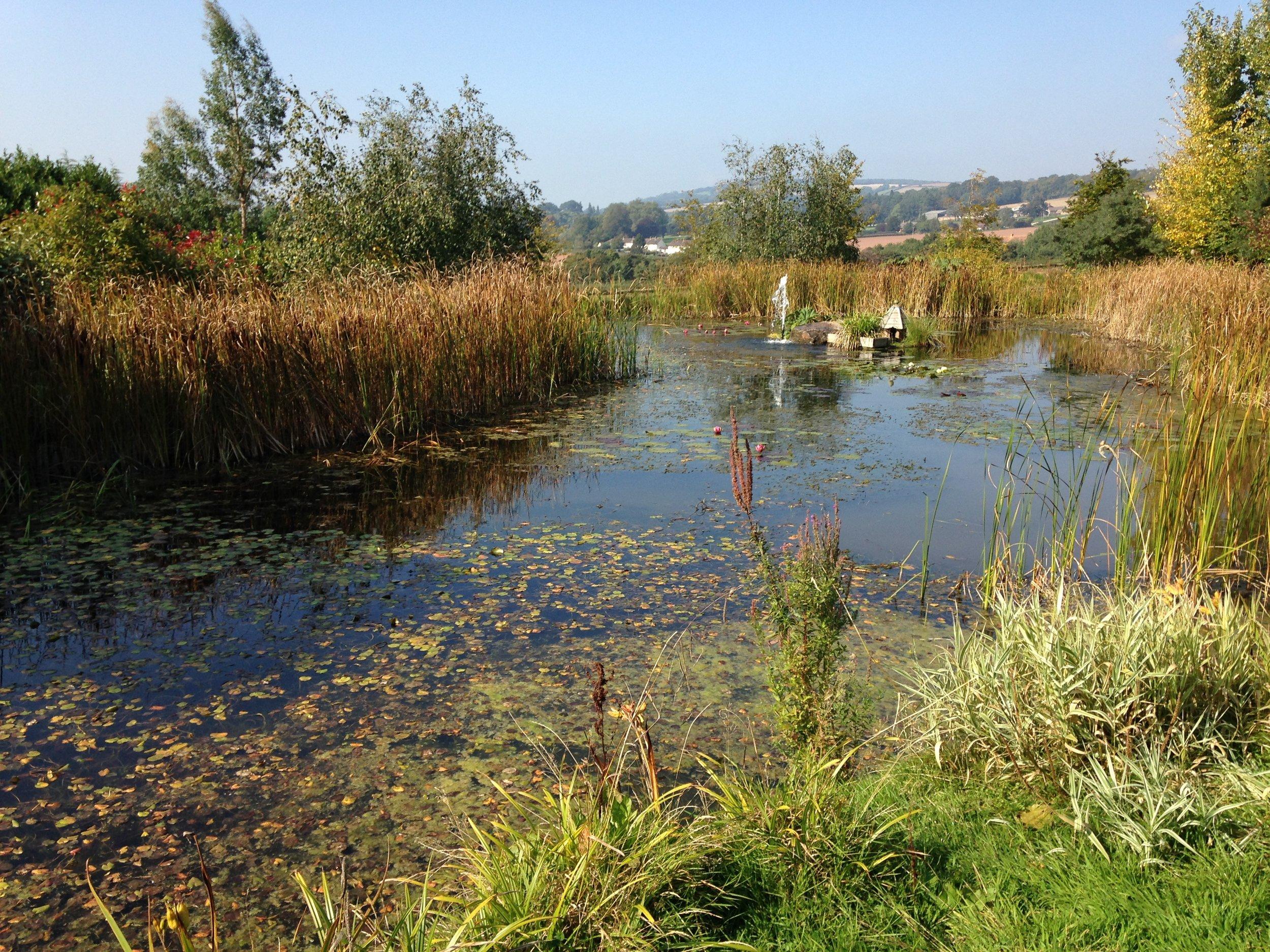 Aquatic vegetation; starting to take over