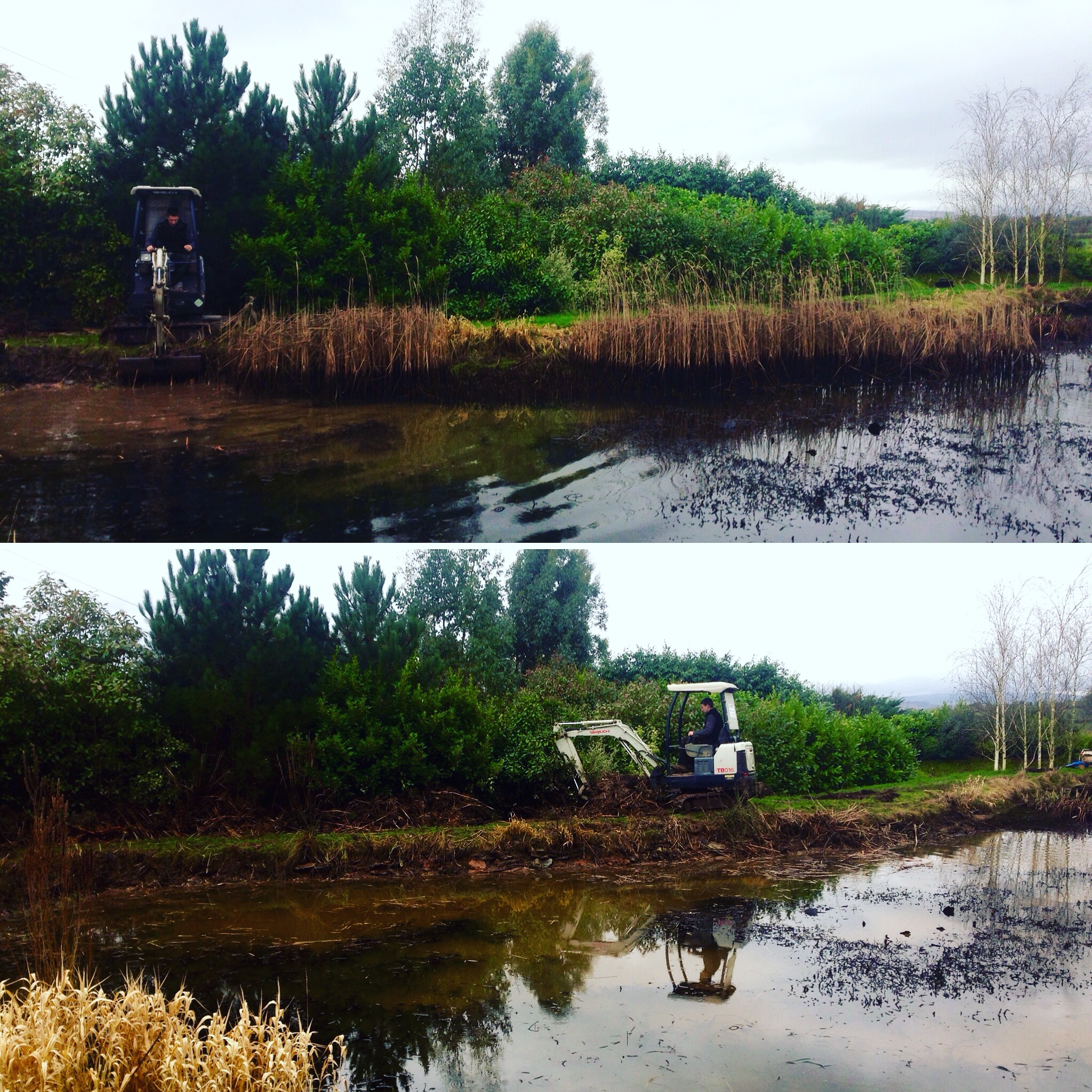 Typha removal