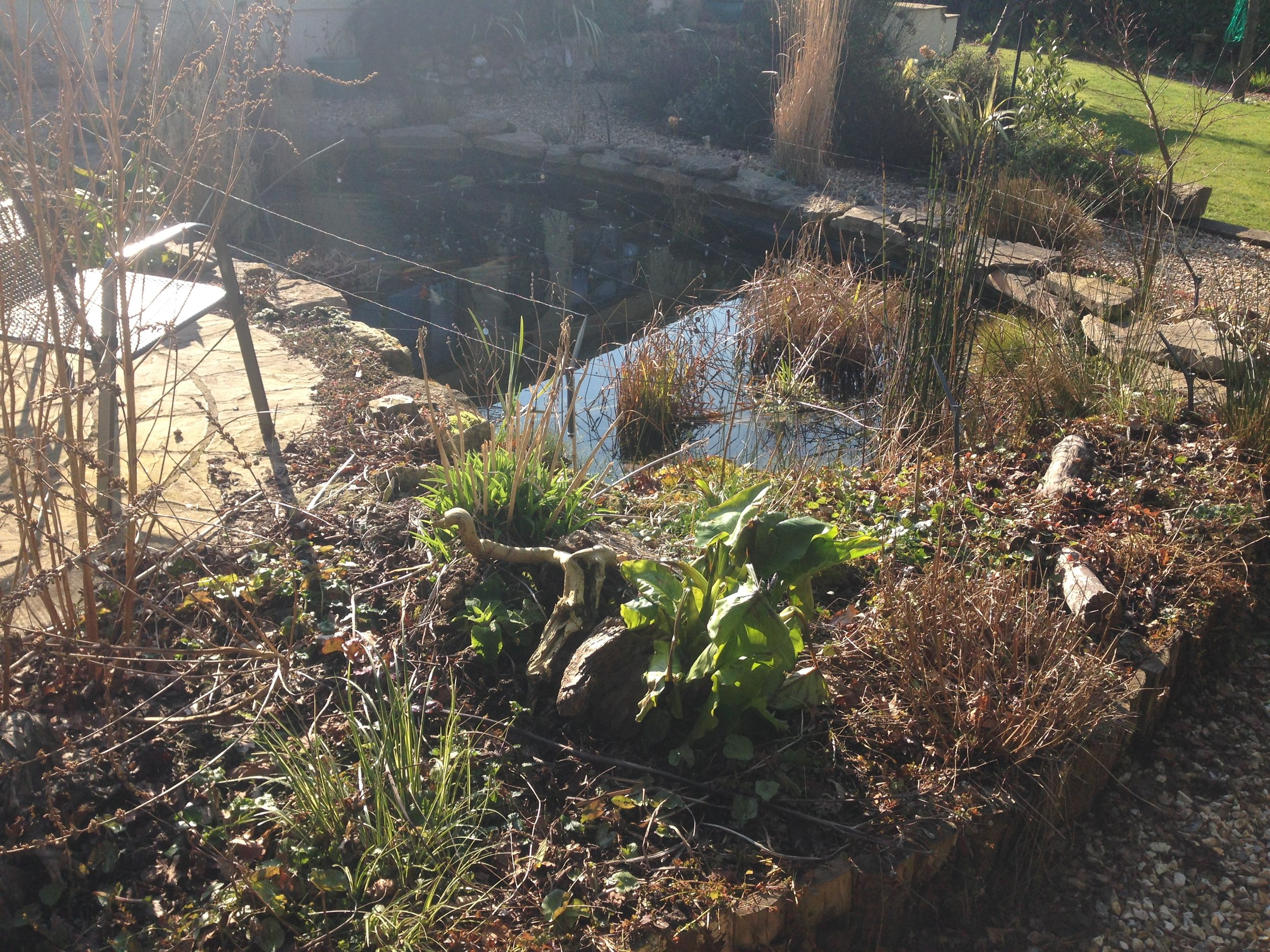 Before… - Overgrown tired looking pond & bog garden