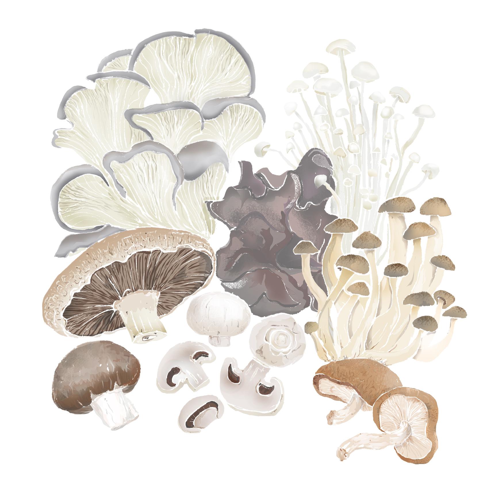 M - Mushrooms
