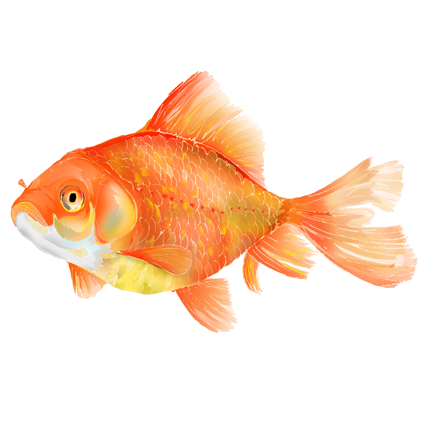 G - Goldfish