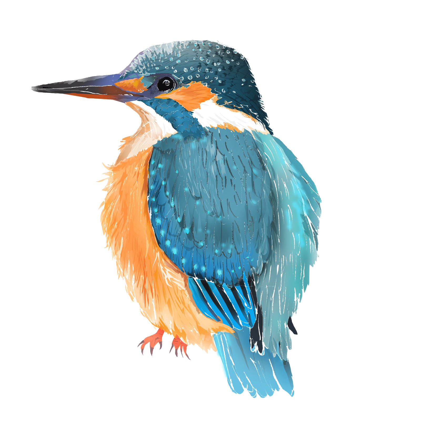 K - Kingfisher