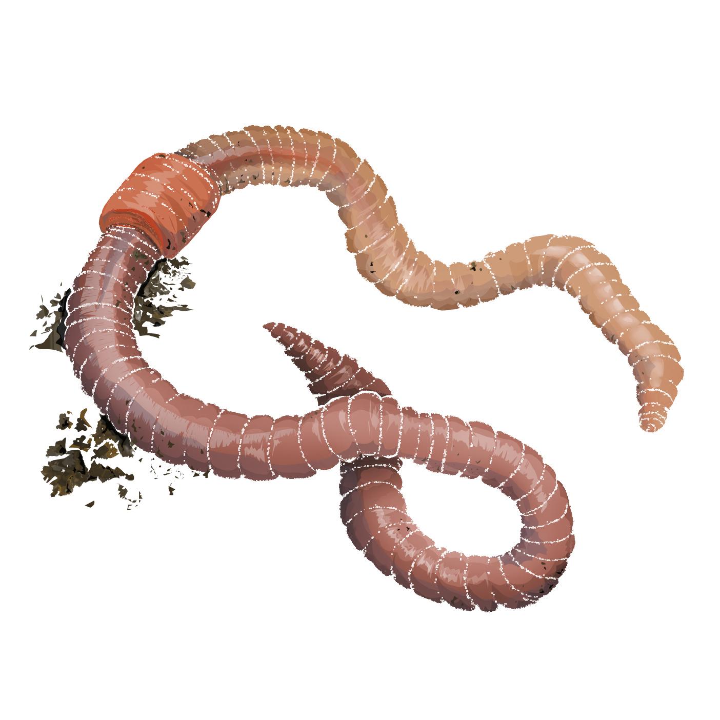 E - Earthworm