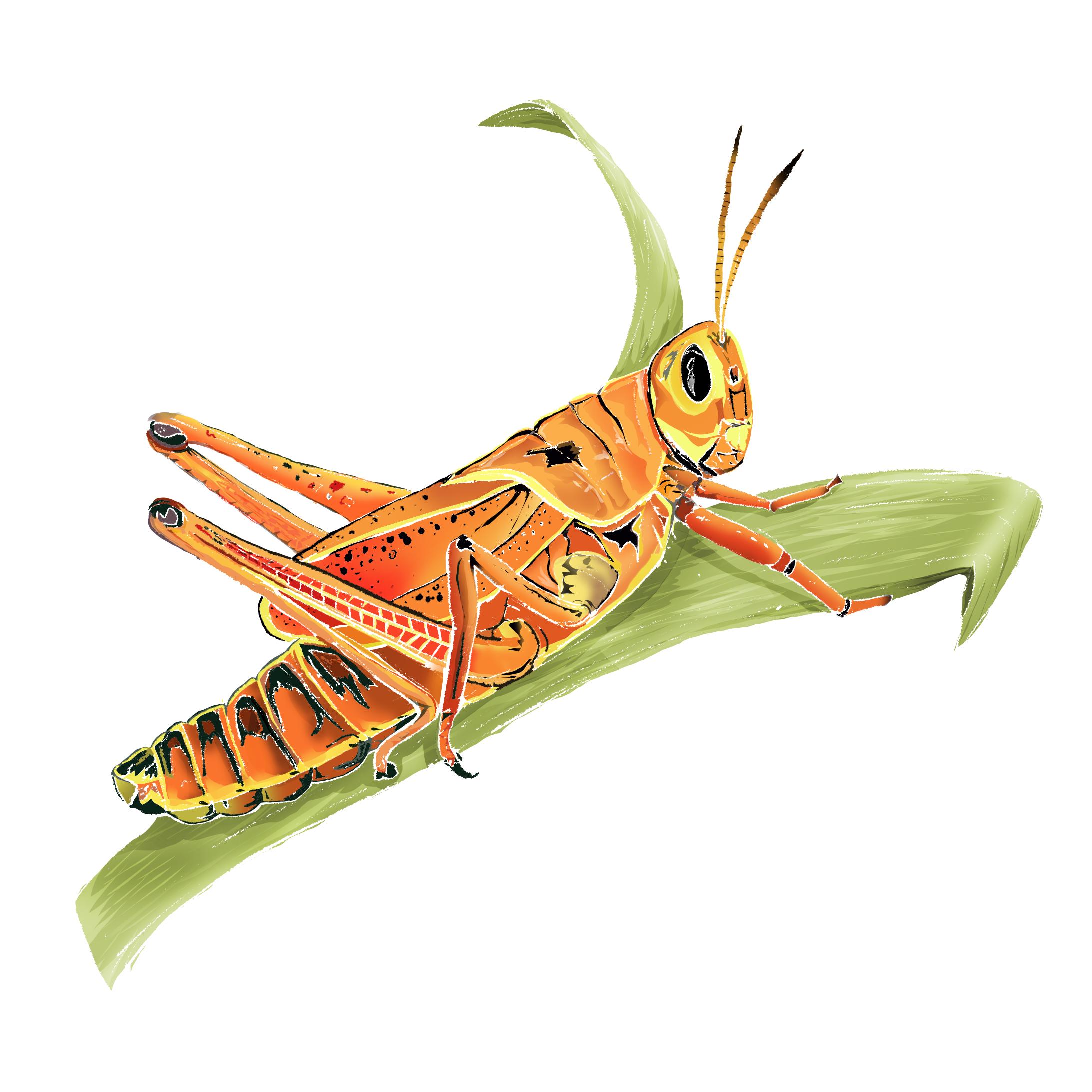 G - Grasshopper