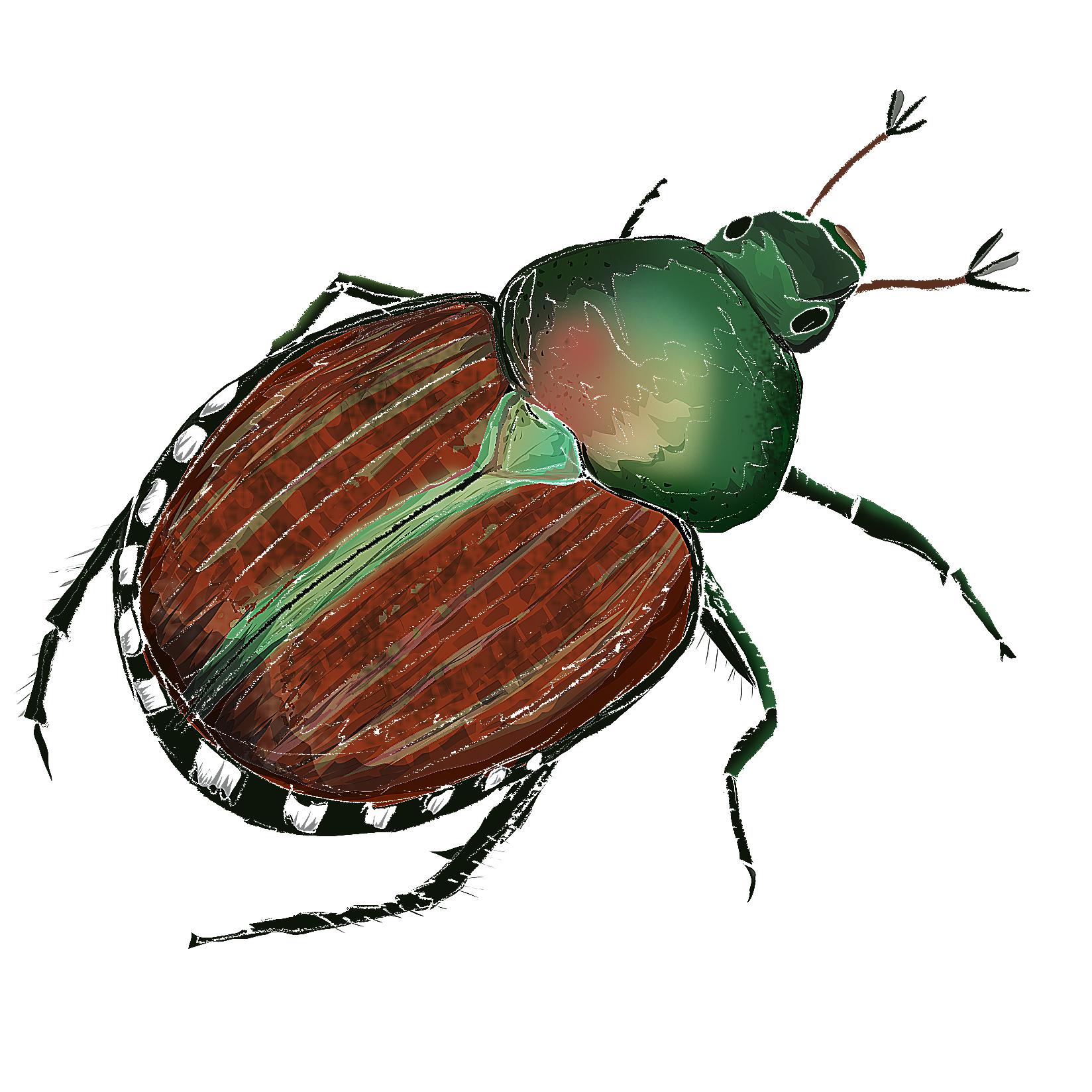 J - Japanese Beetle