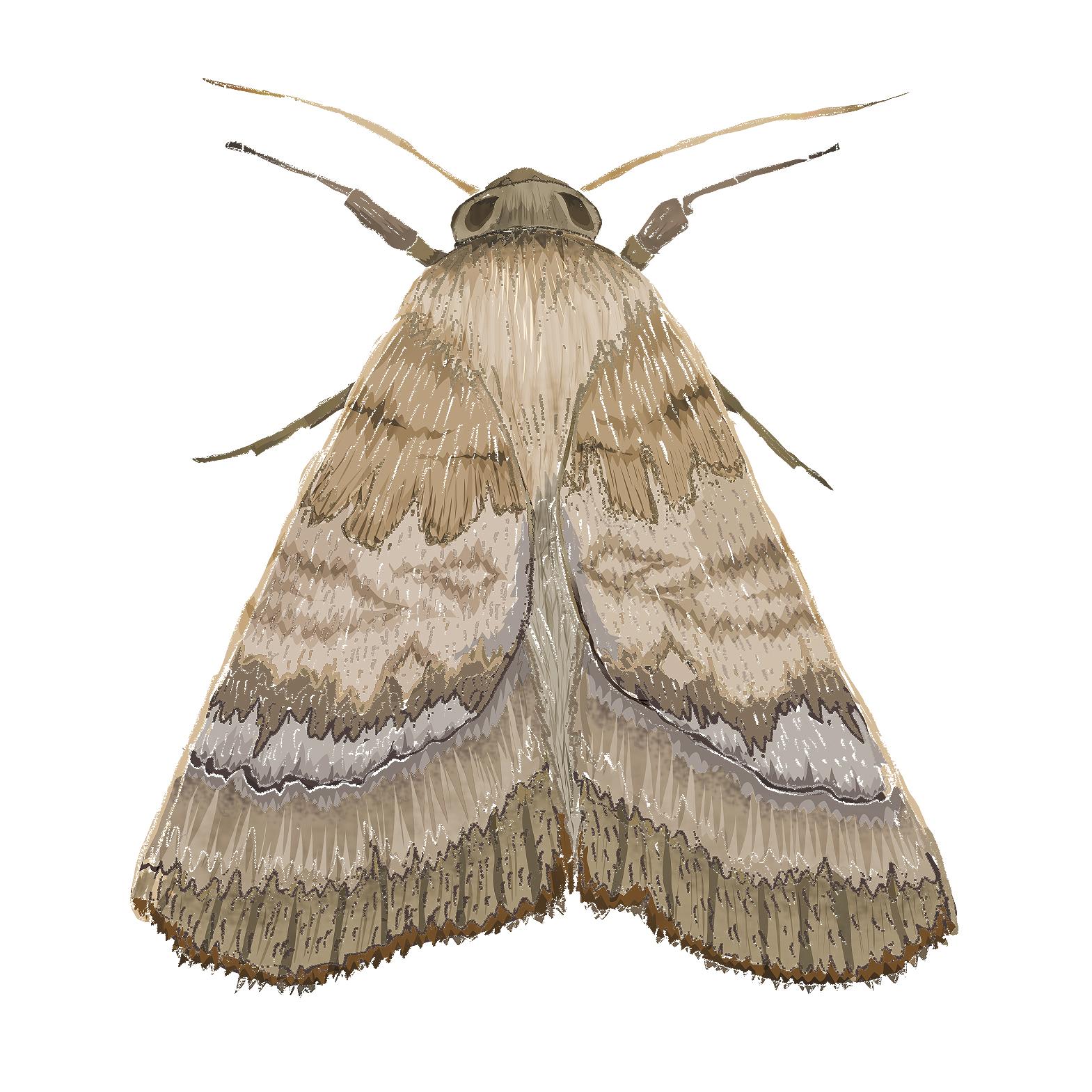 M - Moth
