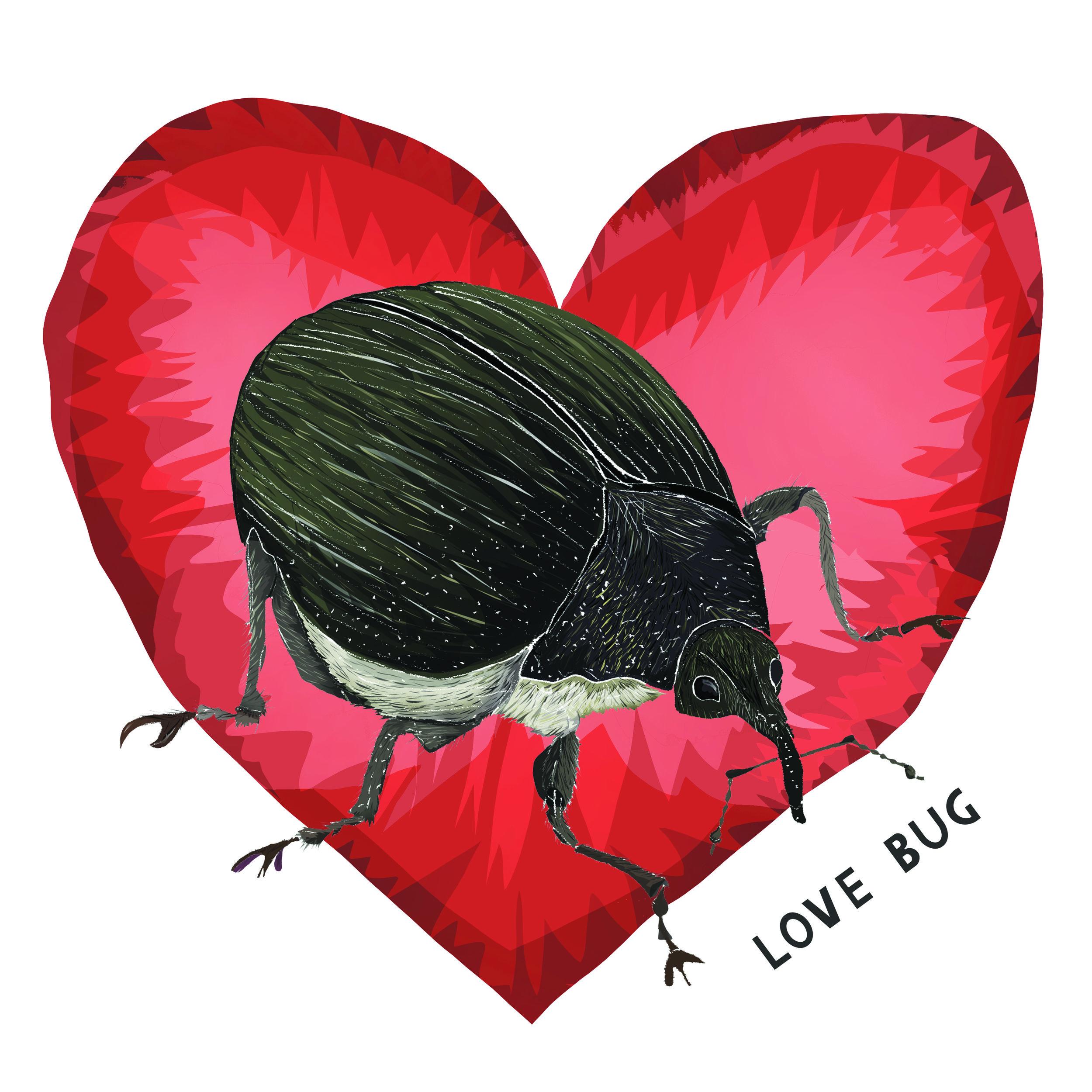 Love bugs-02.jpg