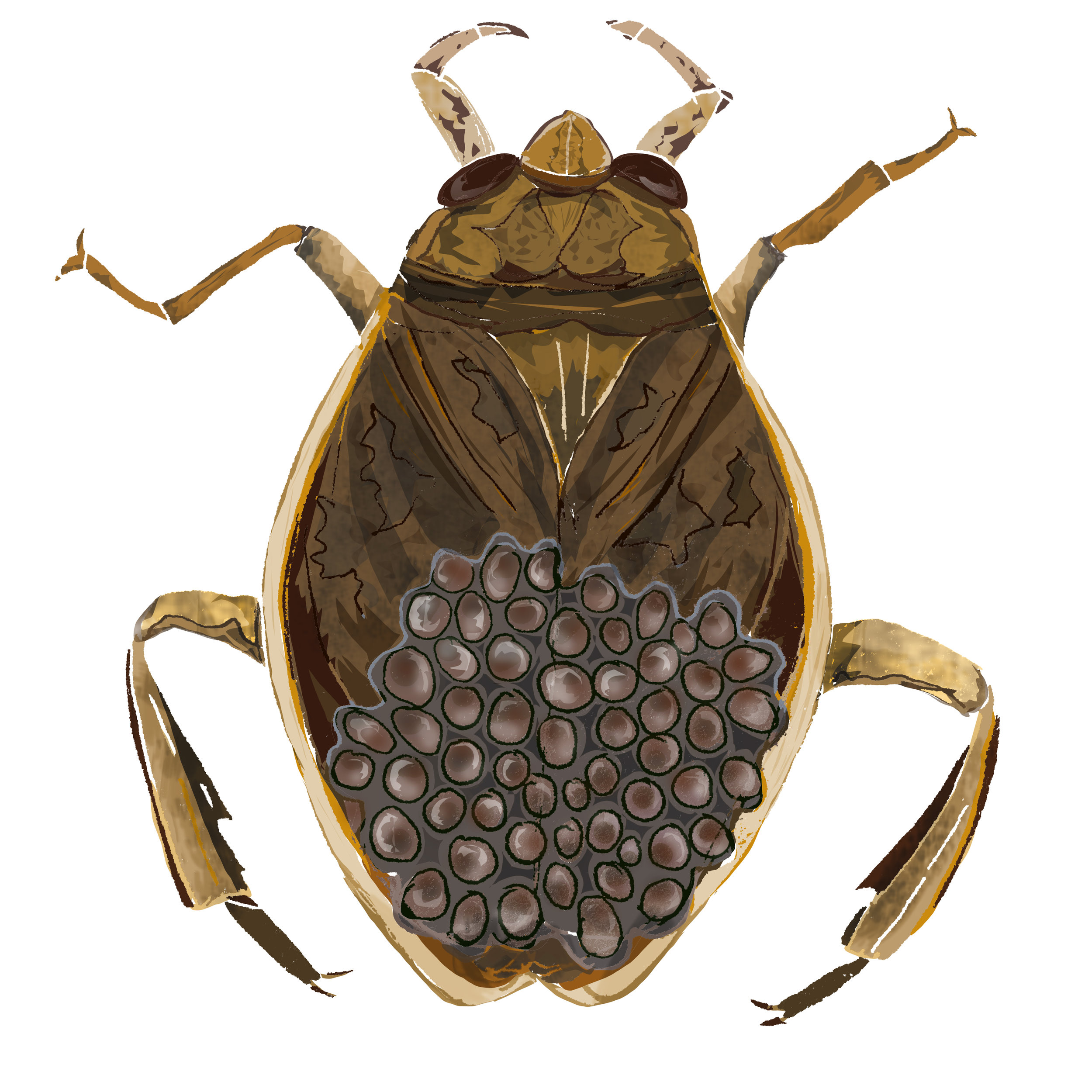 W - Water bug