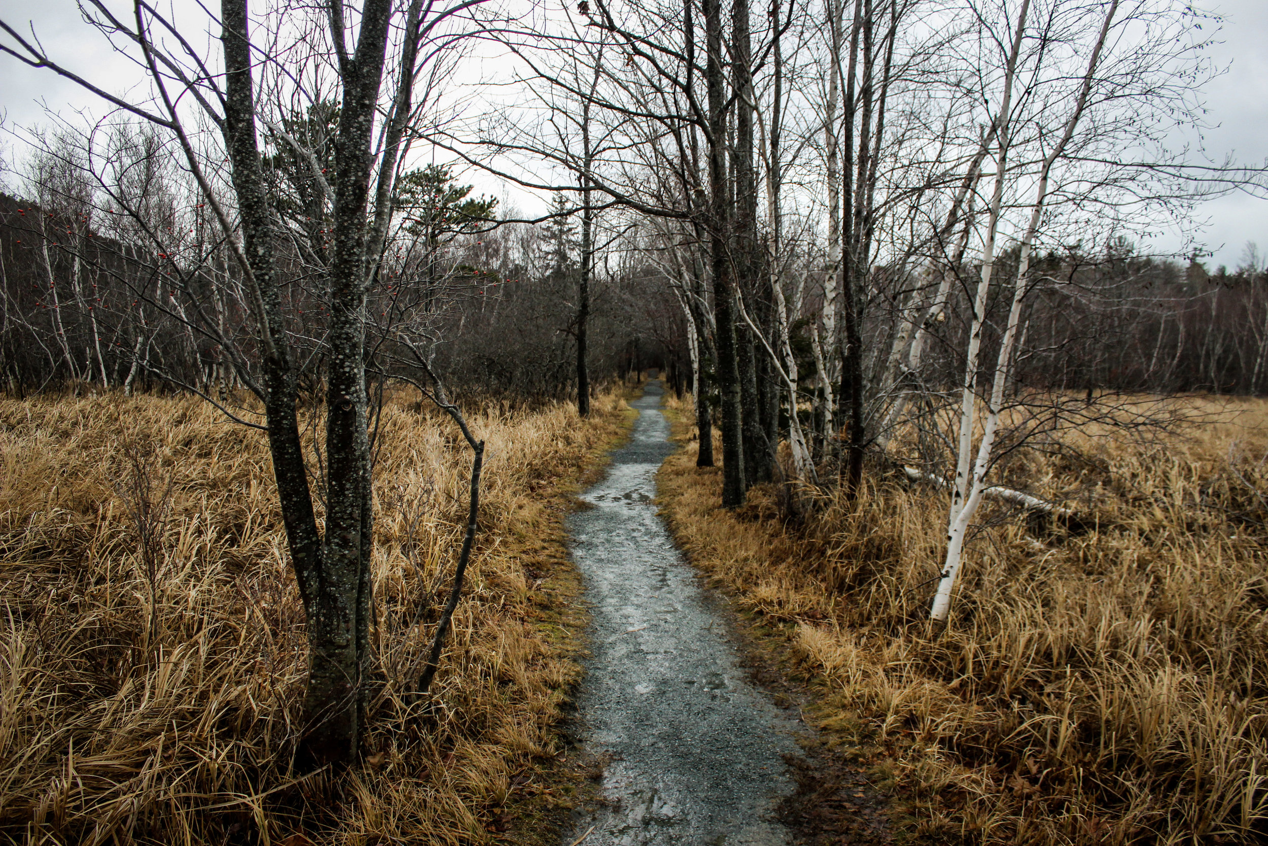 @Acadia National Park, ME