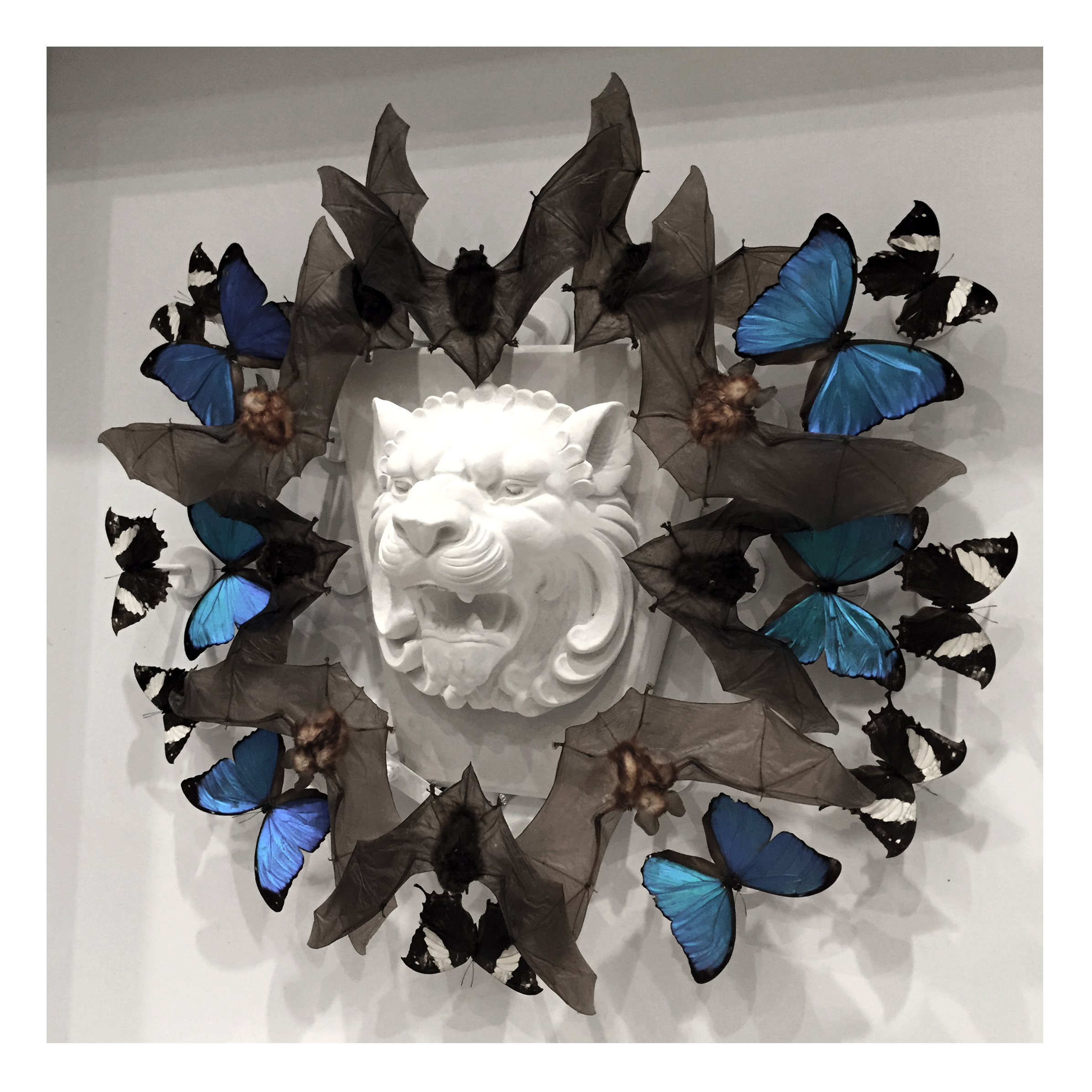 "Joseph Grazi, ""Simba"" 2016. Taxidermy bates, dried butterflies, and stone sculpture on wood mounted in plexiglass. 34"" x 34"" x 8""."