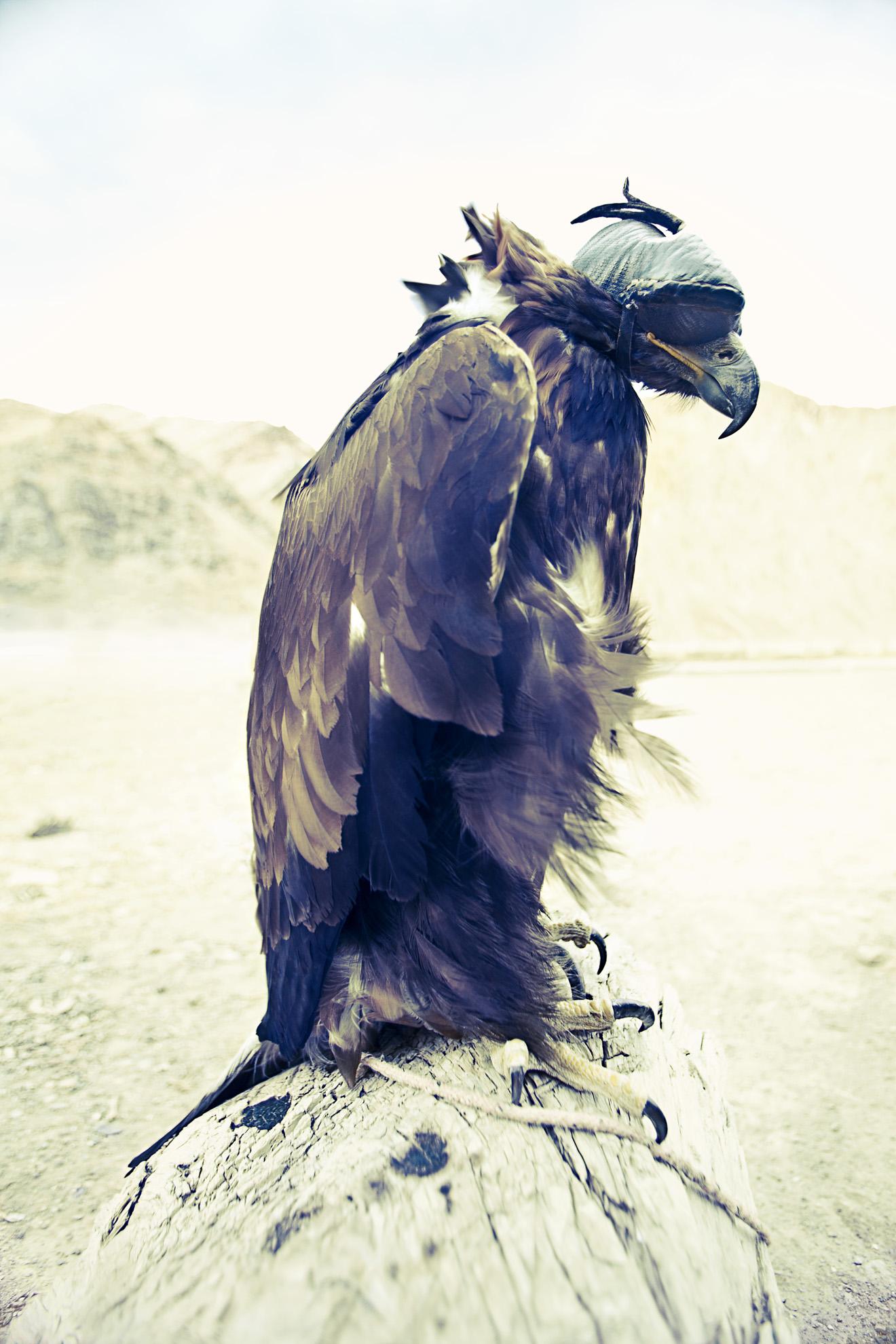 Copy of Medium_ Owerko_Eagle Hunter print_3.jpg