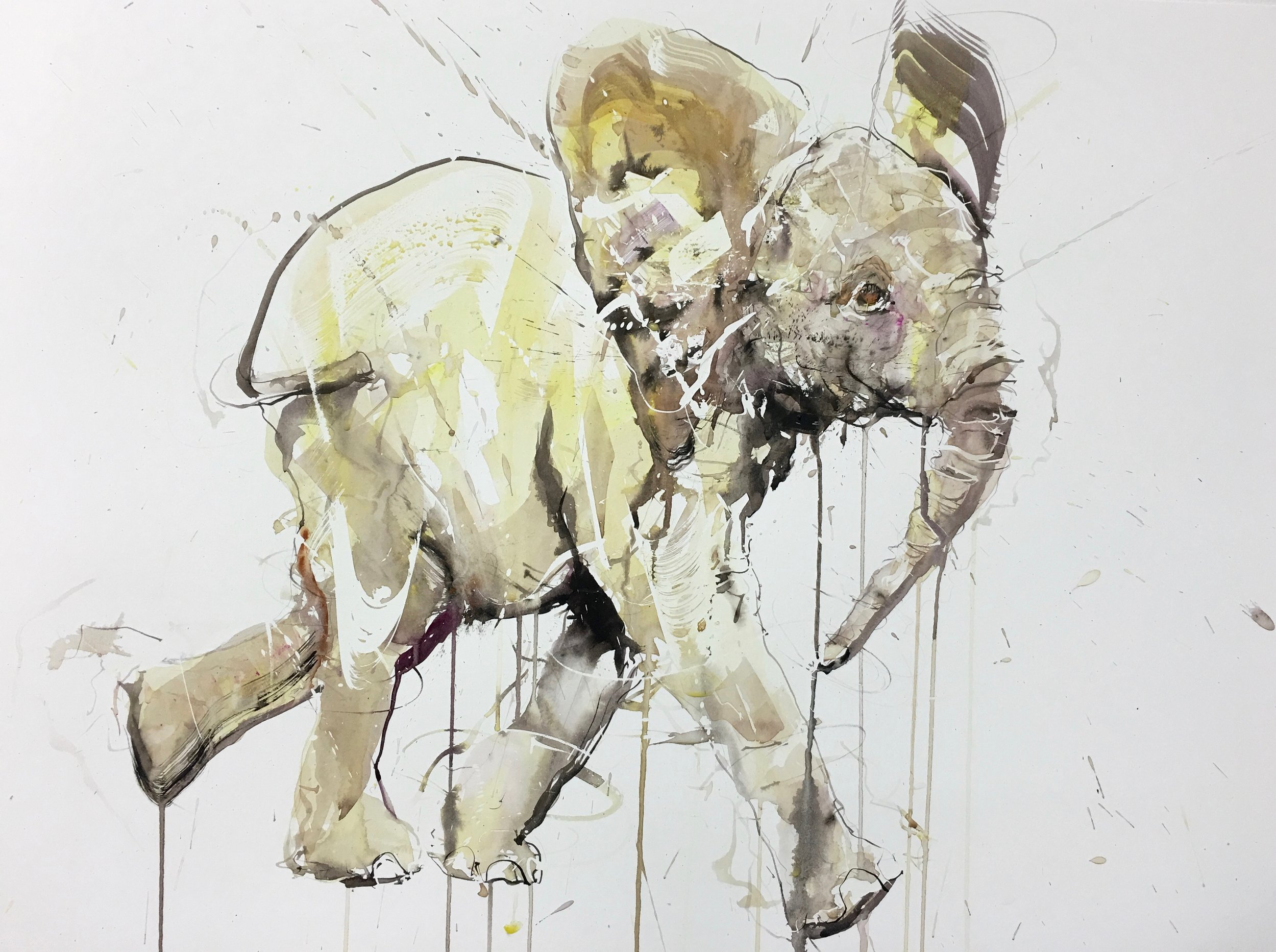 DaveWhite_Young Elephant XIII _2016_Watercolour on Fabriano Artistico 640gsm_30x 22.jpg