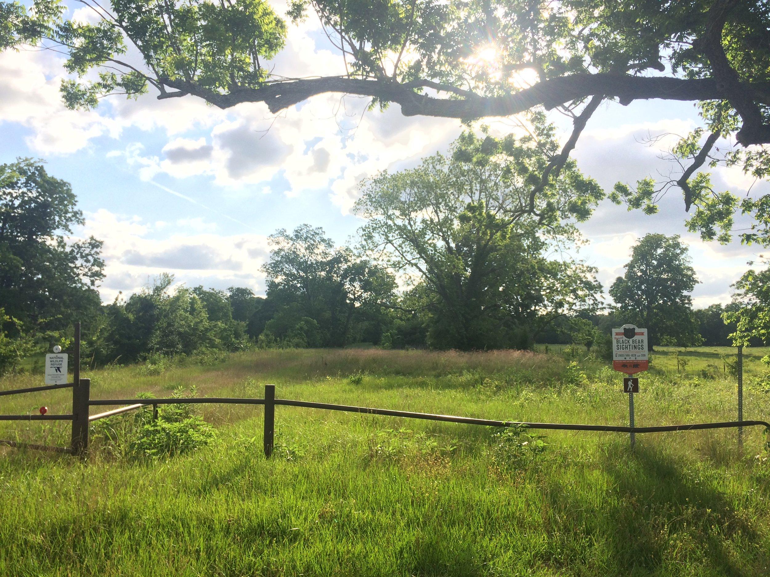 Summer 2017 at National Wildlife Refuge near Sam Houston Regional Library on the Trinity