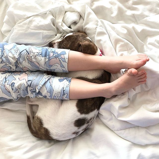 "Cute toes on a cute puppy... I think it's safe to say this little pound puppy has ""the life!"" 🥰💗🐶 