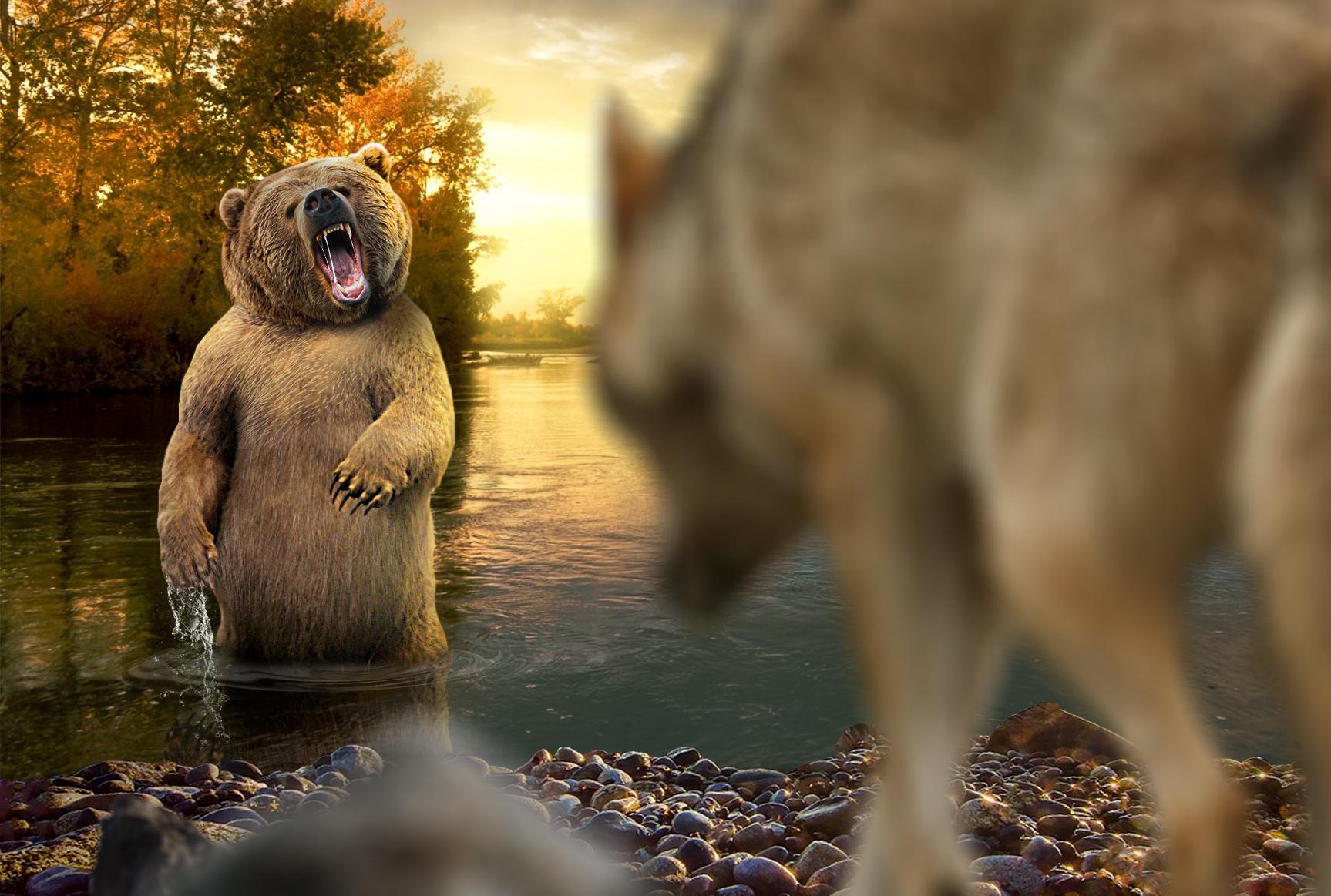 BearVSWolf.jpg