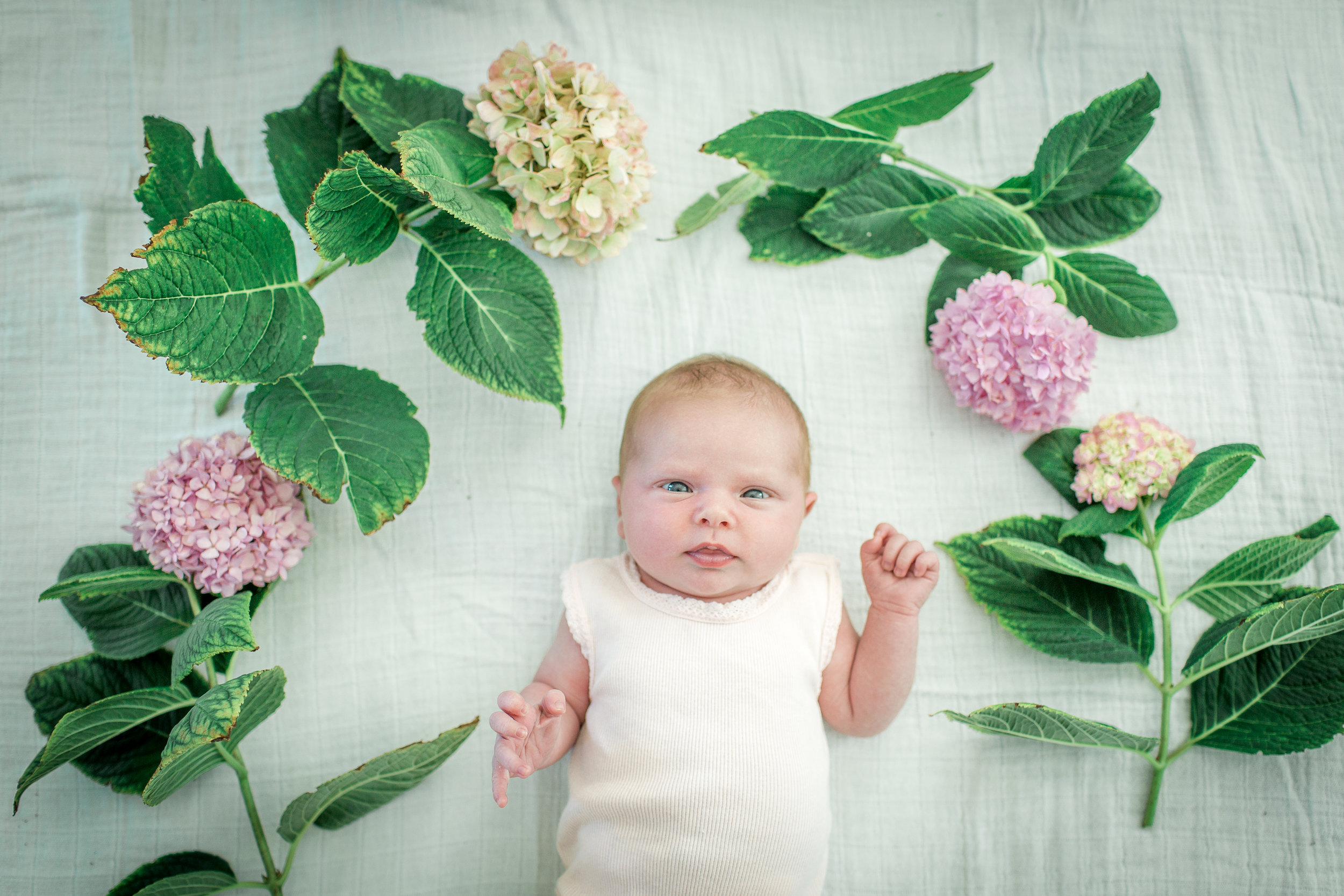 Newborn_Plunkett-1.jpg