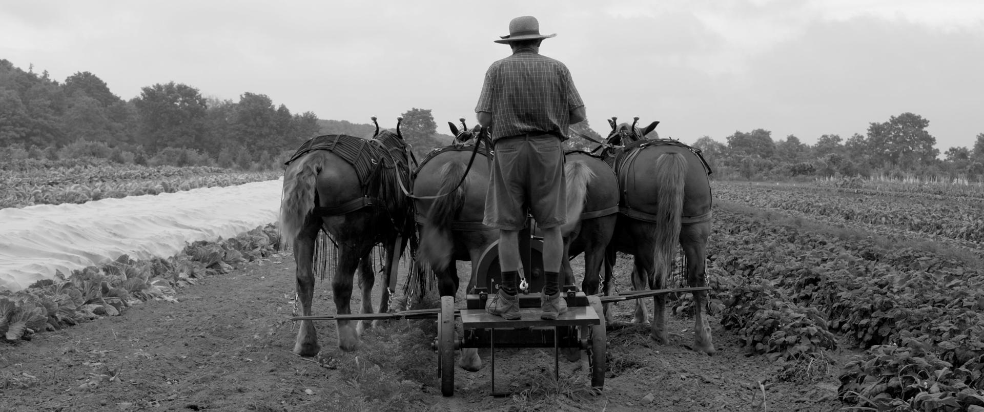 Workhorse-Still03-Farming-Fix.jpg
