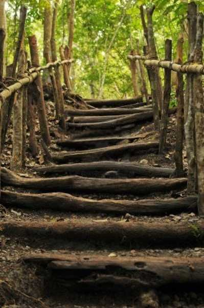 steps in the woods.jpg