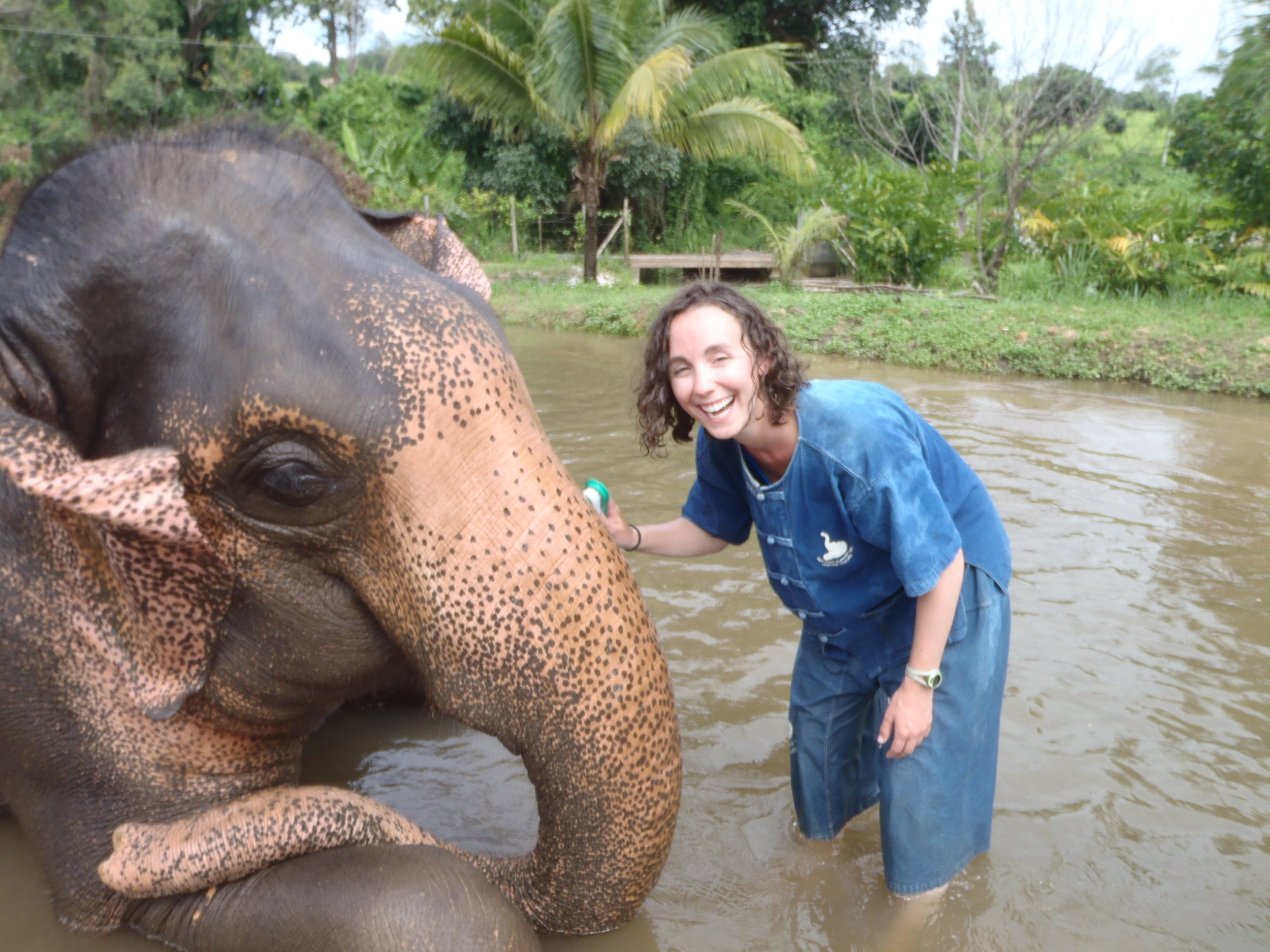 Elephant smiles at Baan Chang Elephant Park Chiang Mai Thailand